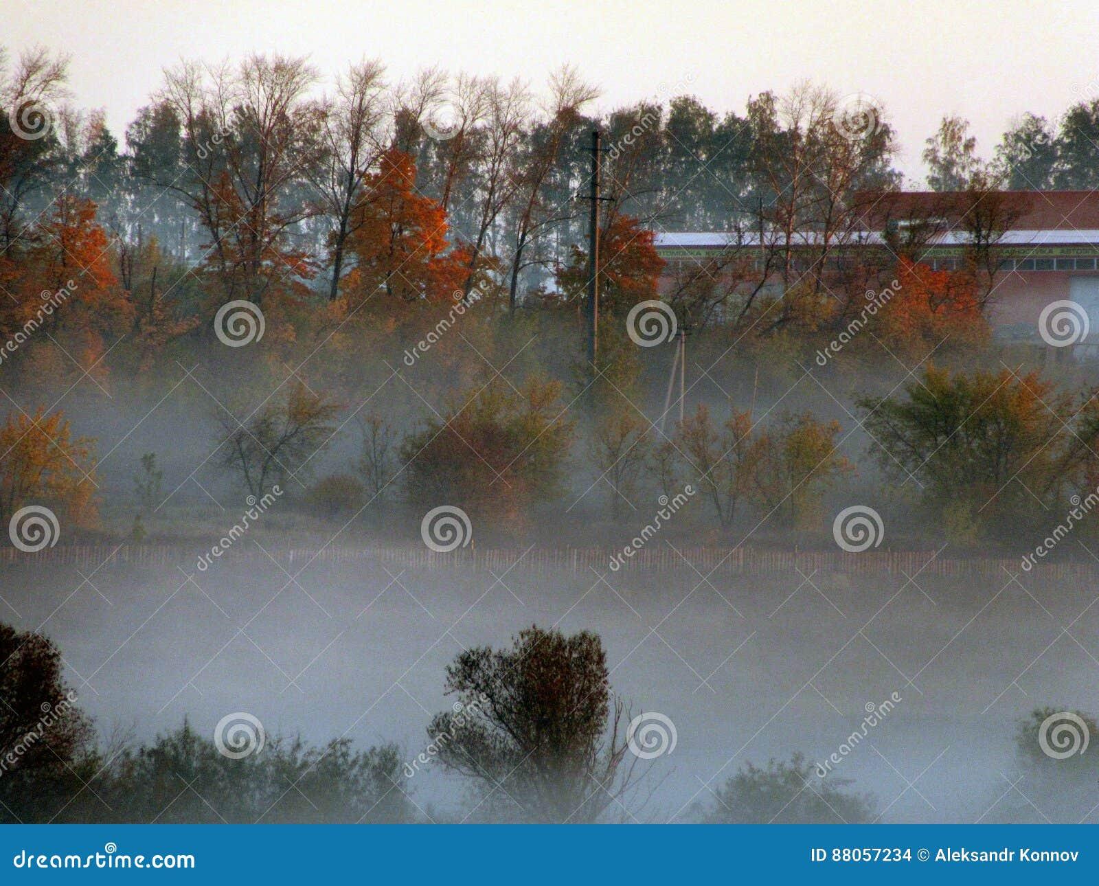 утро тумана над прудом панорамы
