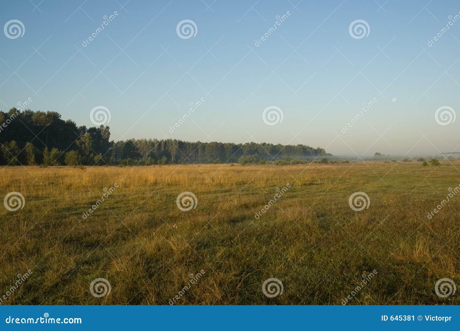 Download утро стоковое изображение. изображение насчитывающей флора - 645381