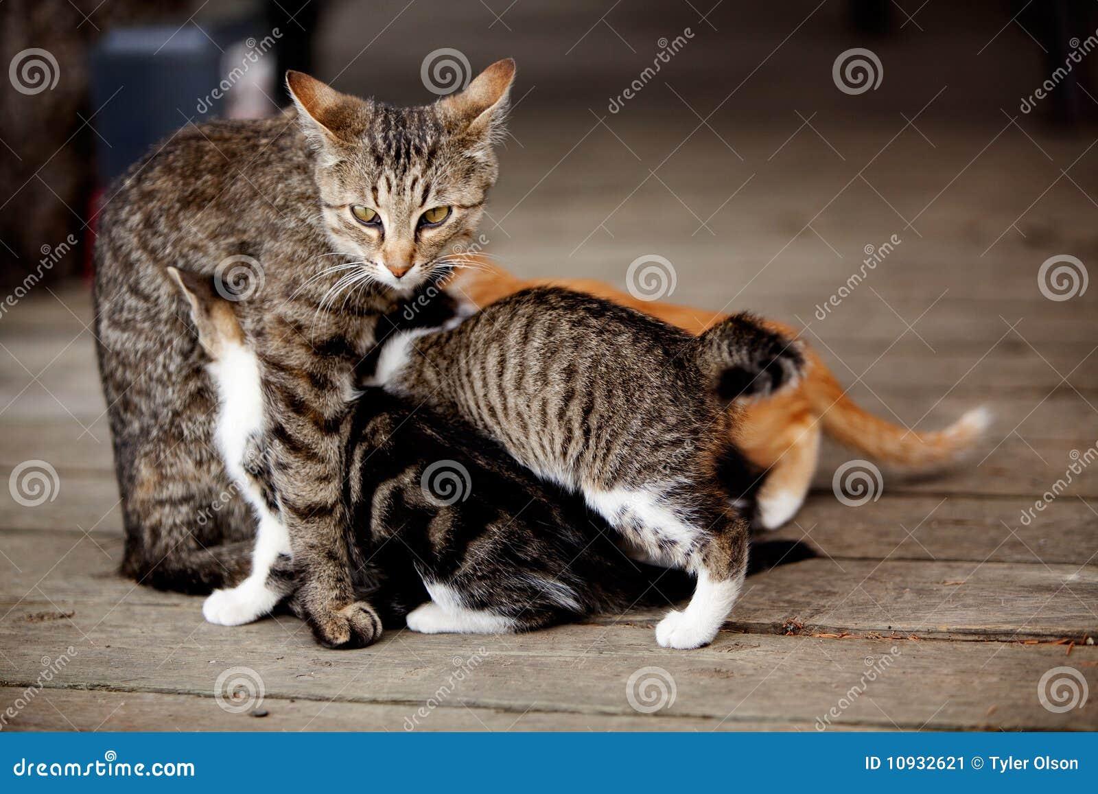 уход котенка