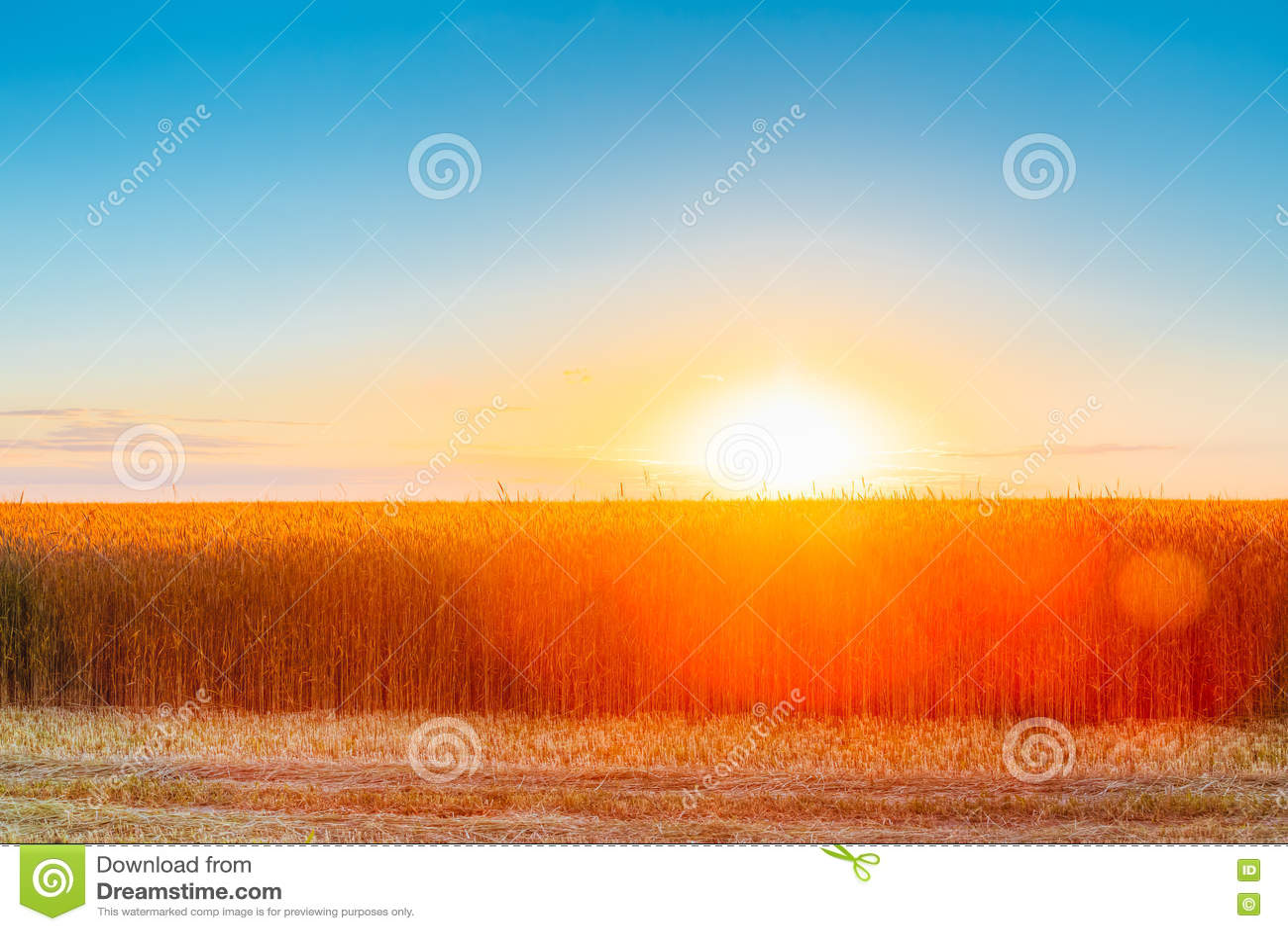 Картинки с ярким изображением природы