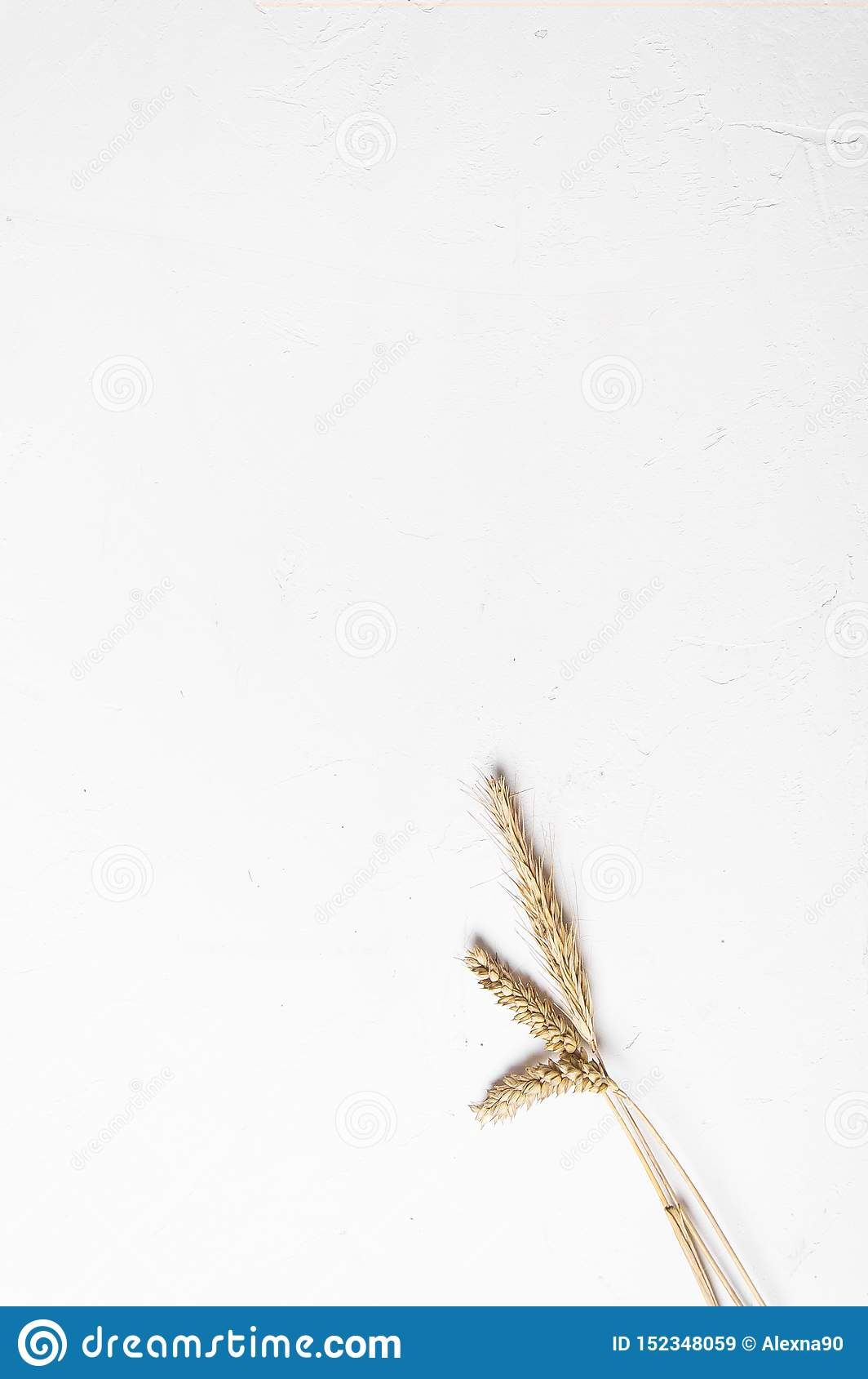 Уши хлопьев на белой предпосылке Уши пшеницы и рож r