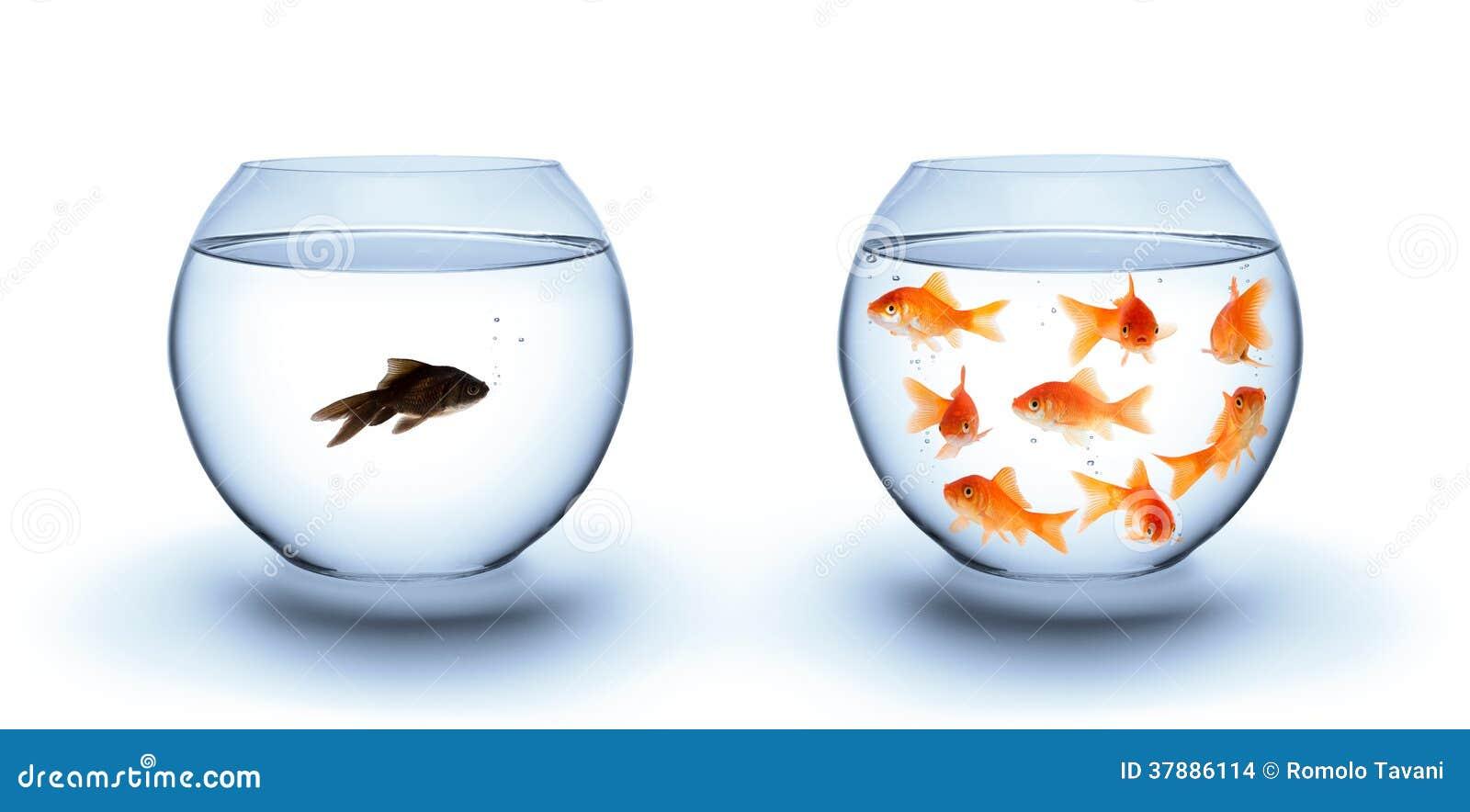 Удите в уединении - концепция, расизм и изоляция разнообразия