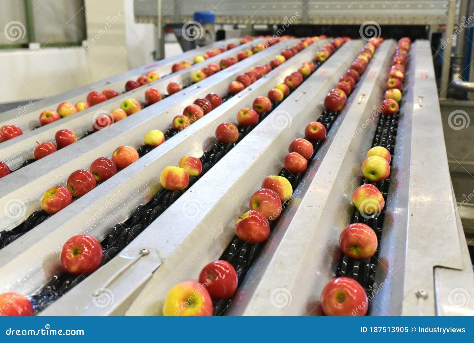 конвейер с яблоками
