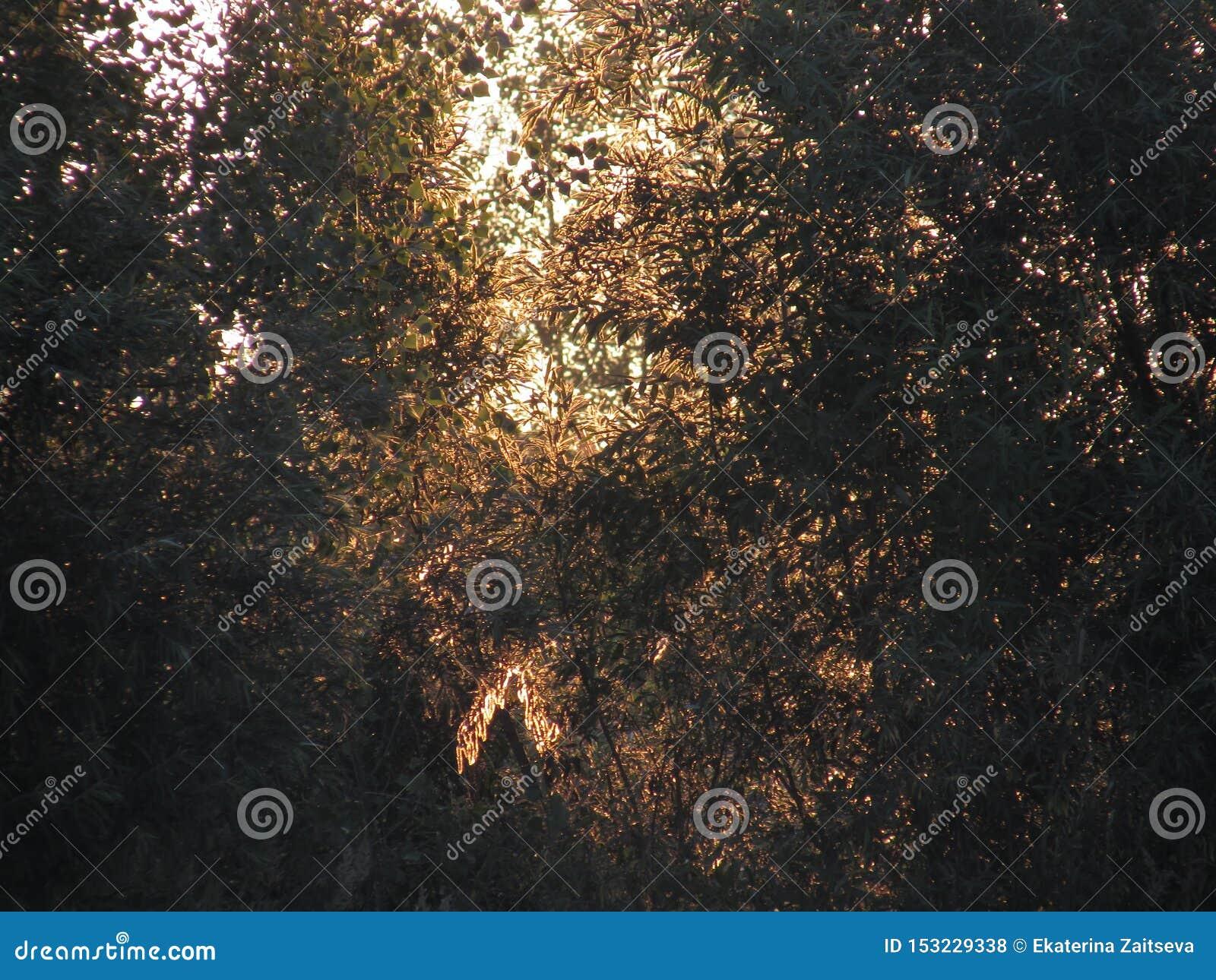 Фантастический красивый контур openwork солнечной золотой листвы кустов и деревьев в свете поднимая желтого солнца