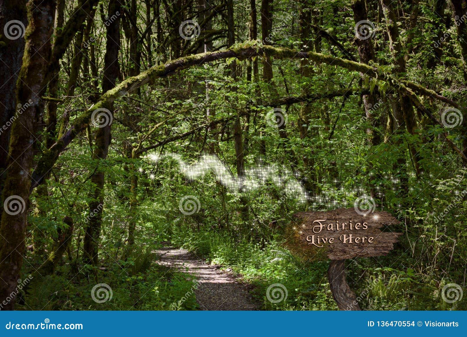 Феи в лесе на волшебном пути