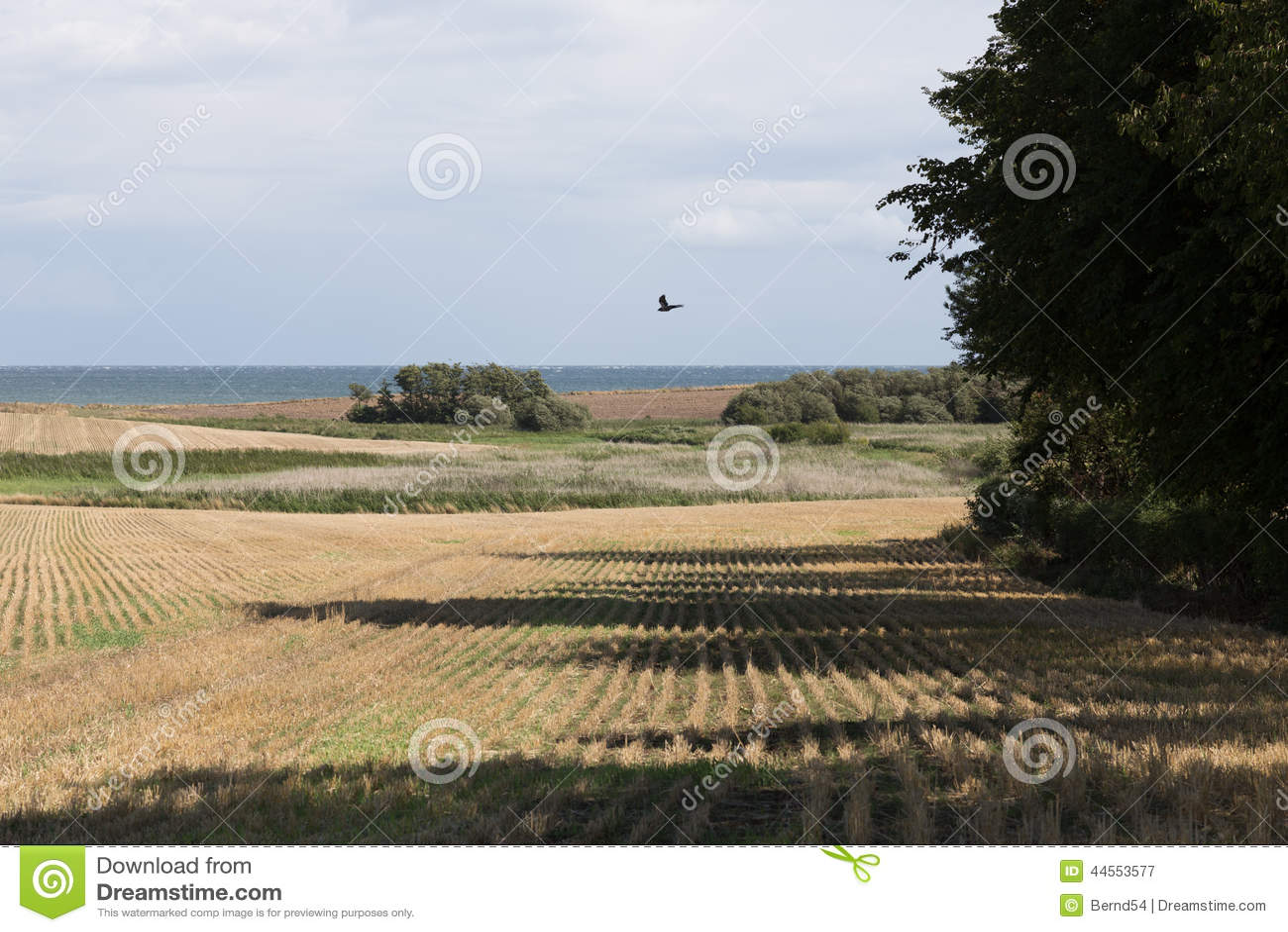 Ферма в поле зерна