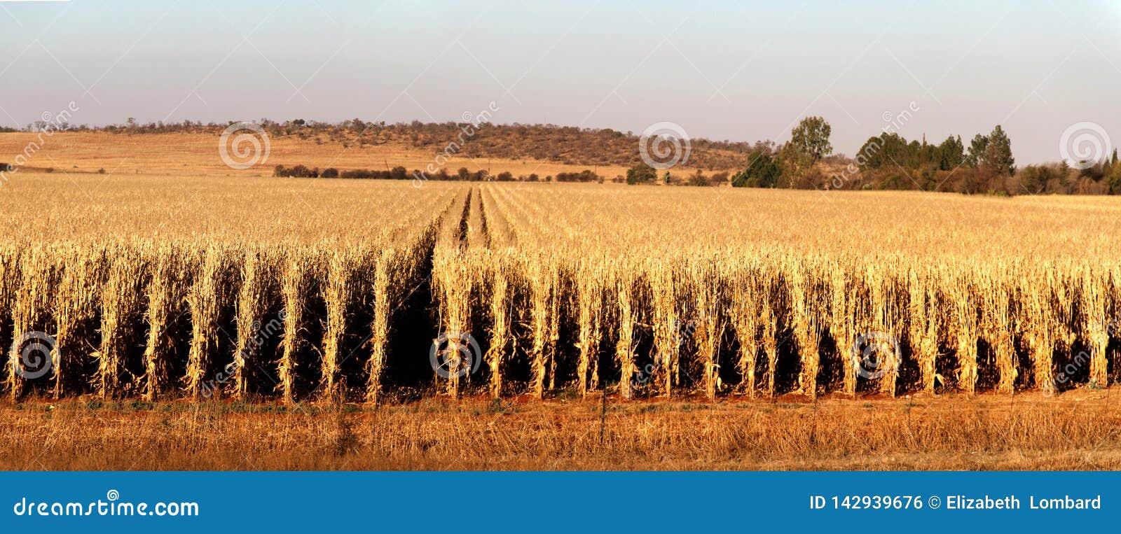 Ферма в Potchefstroom, Южной Африке