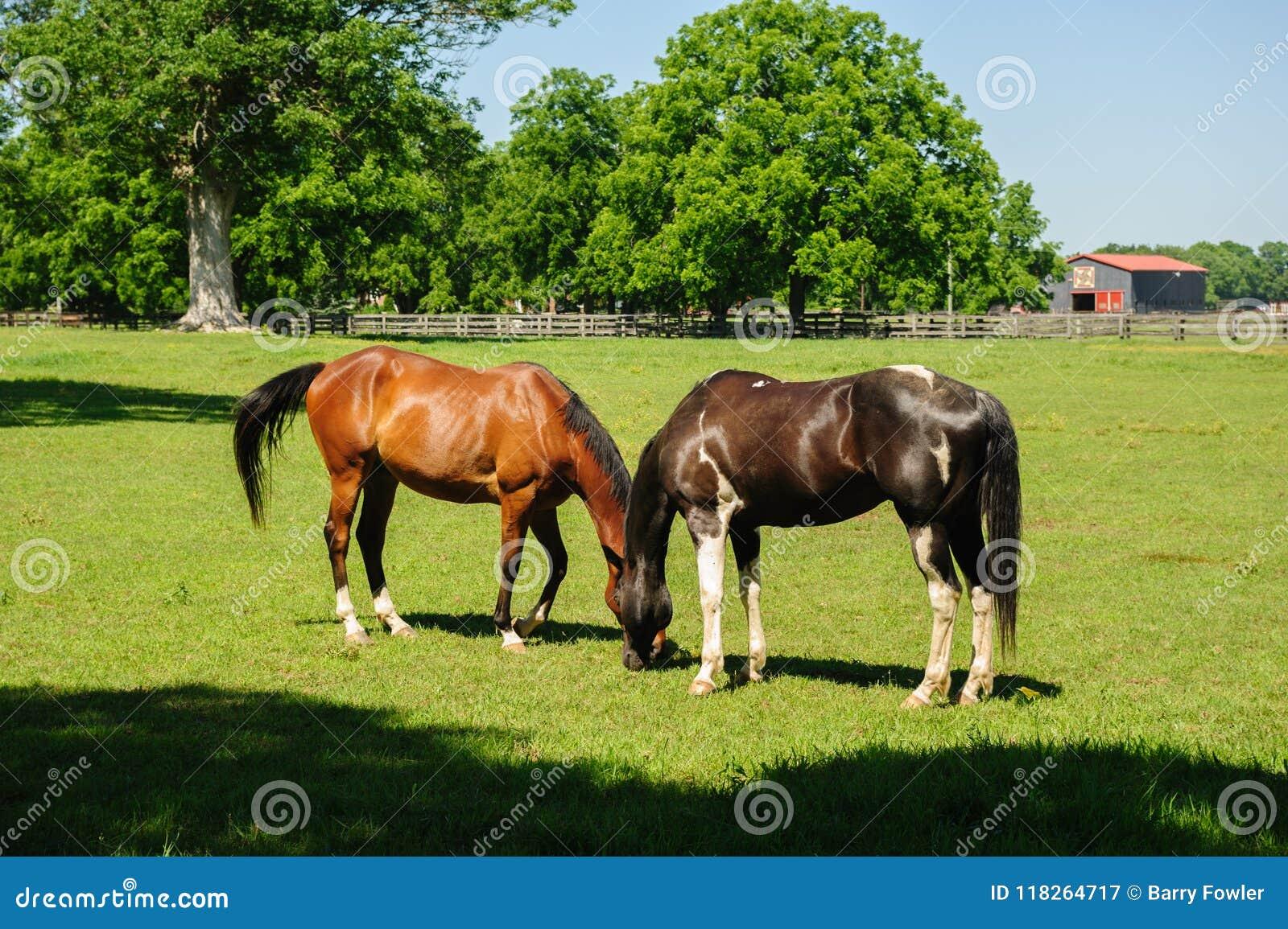 ферма пася лошадей