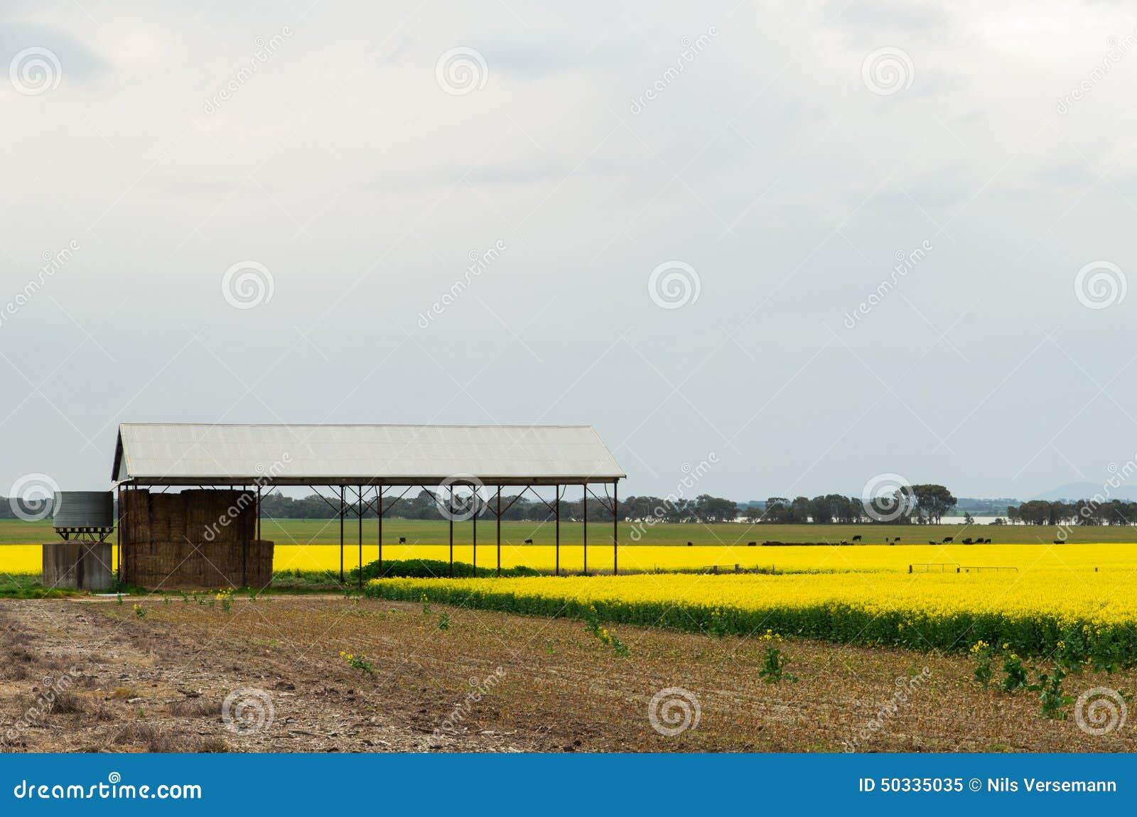 Ферма полинянная около Ballarat, Австралии
