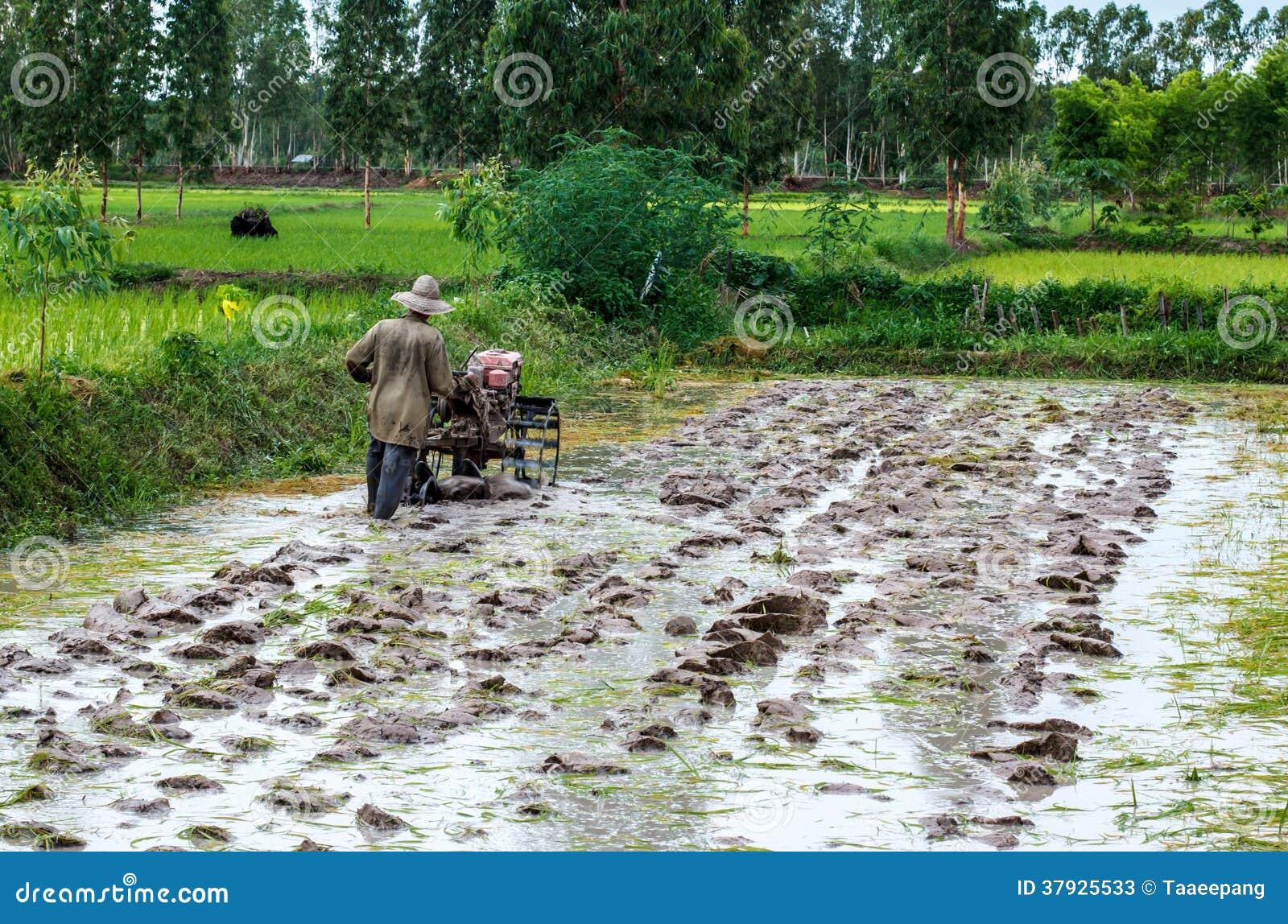 Фермеры Таиланд