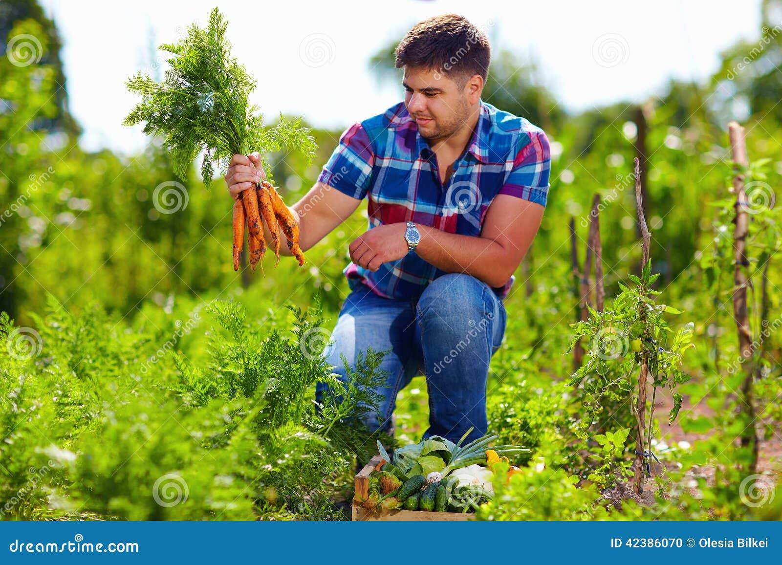 Фермер жать морковей в огороде