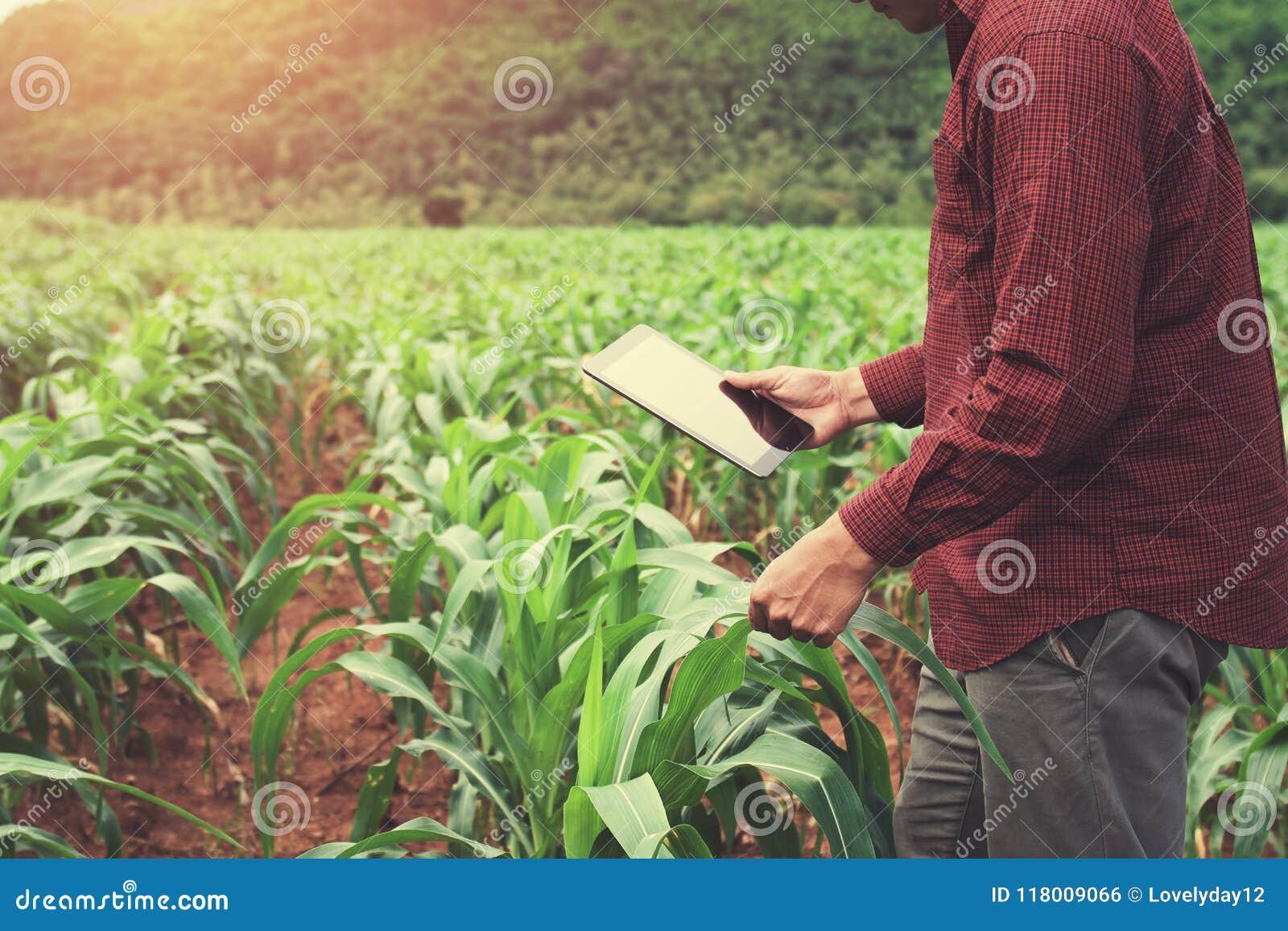фермер используя планшет проверяя данные мозоли f земледелия