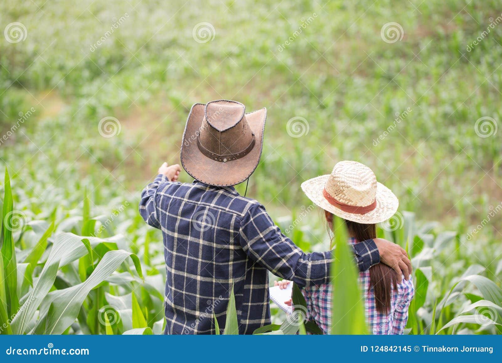 Фермер и исследователь анализируя завод мозоли