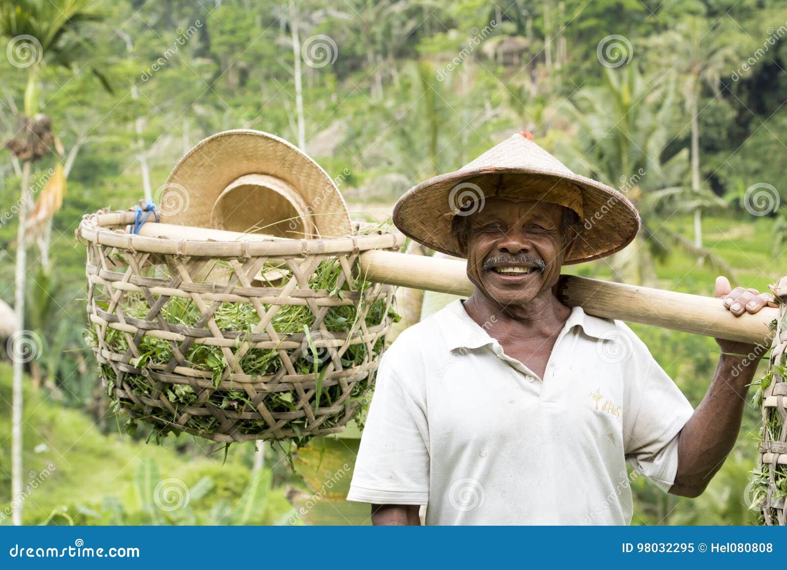 Фермер на работе в рисовых полях, Бали