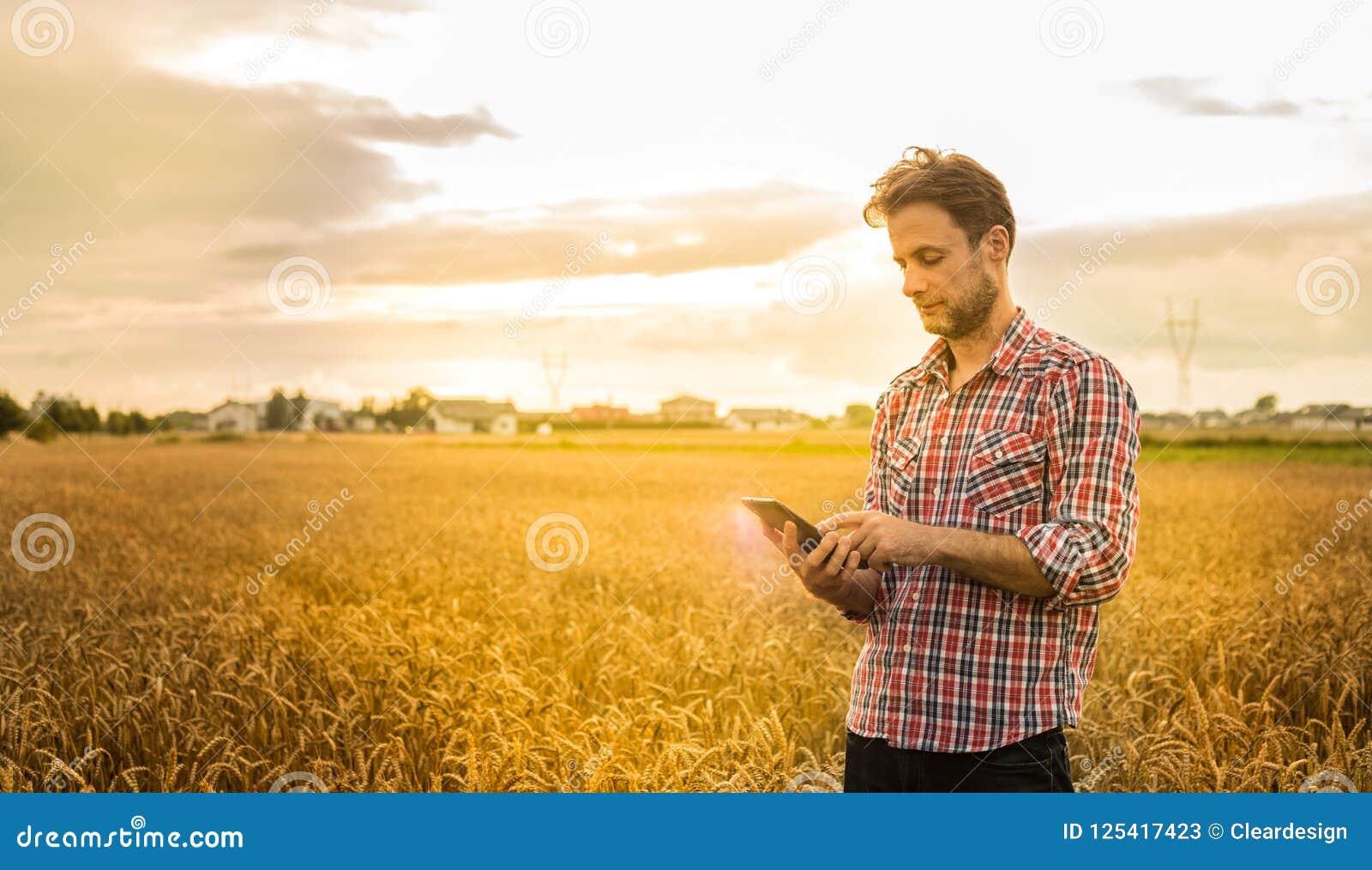 Фермер работая на использовании таблетки перед пшеничным полем