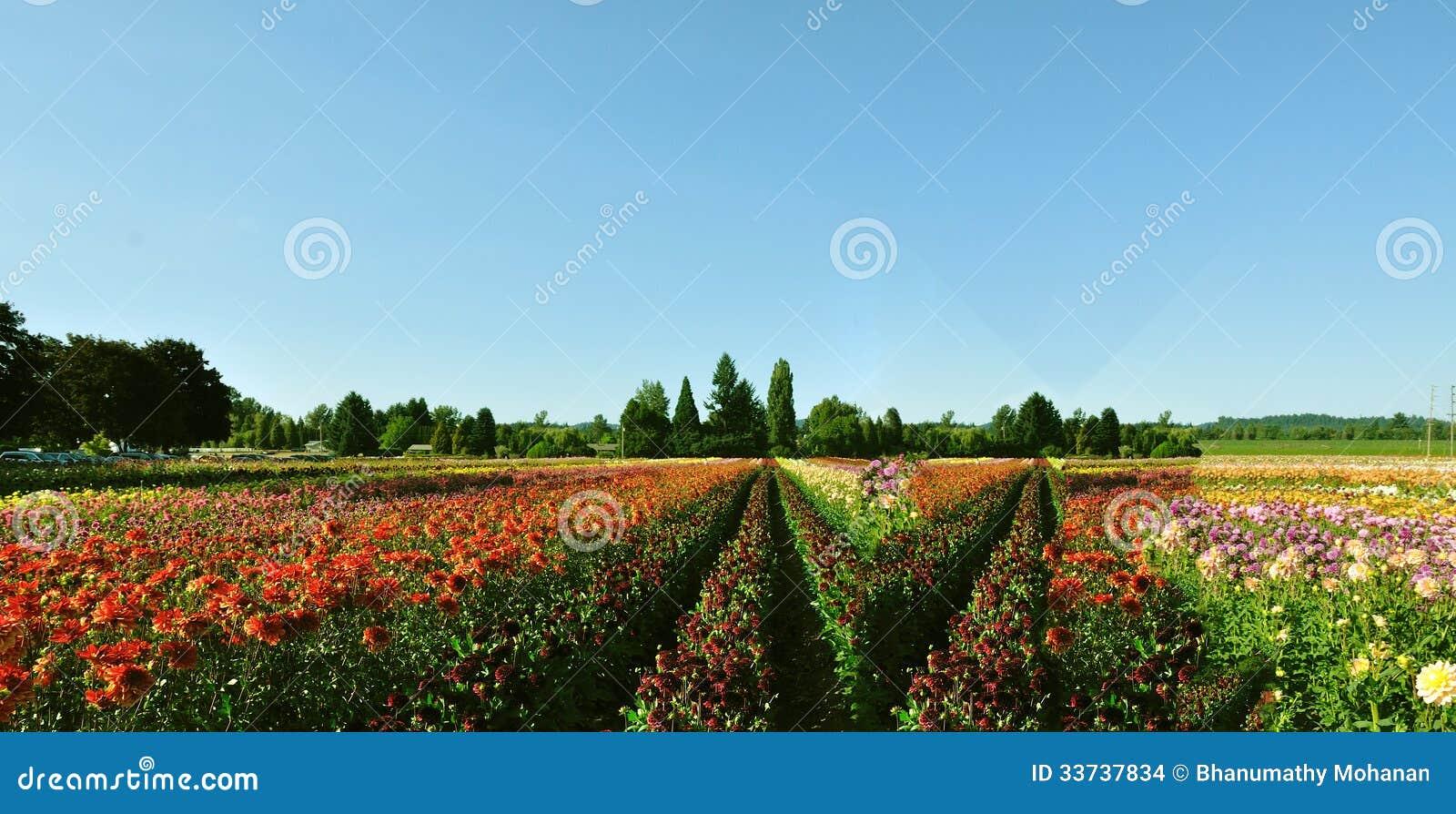 Фестиваль тюльпана