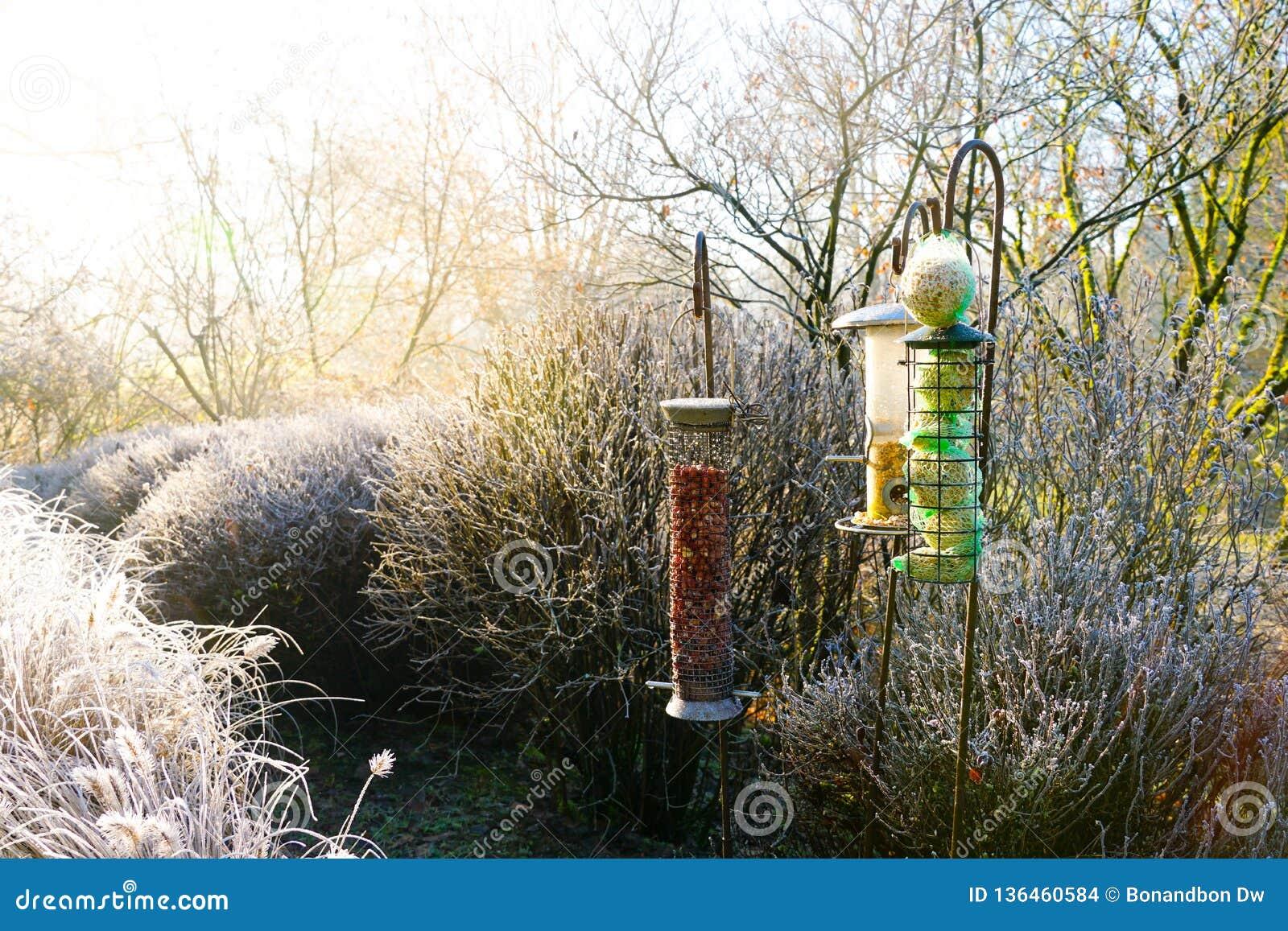 Фидеры птицы со смешанными семенами в красивом саде во время замороженной зимы
