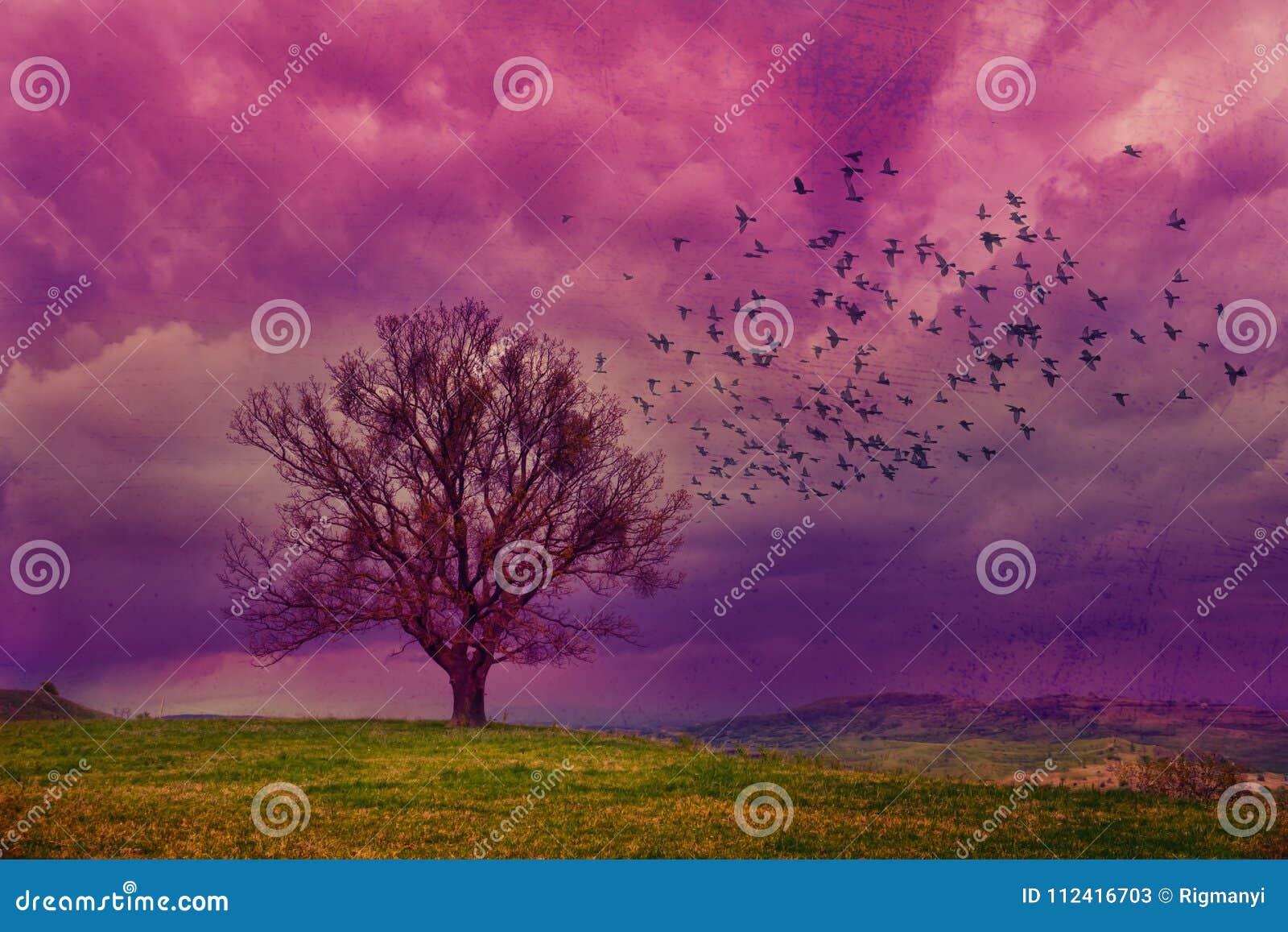 Фиолетовая фантазия