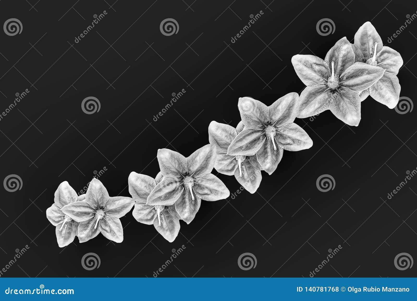 Фиолетовые цветки в черной предпосылке