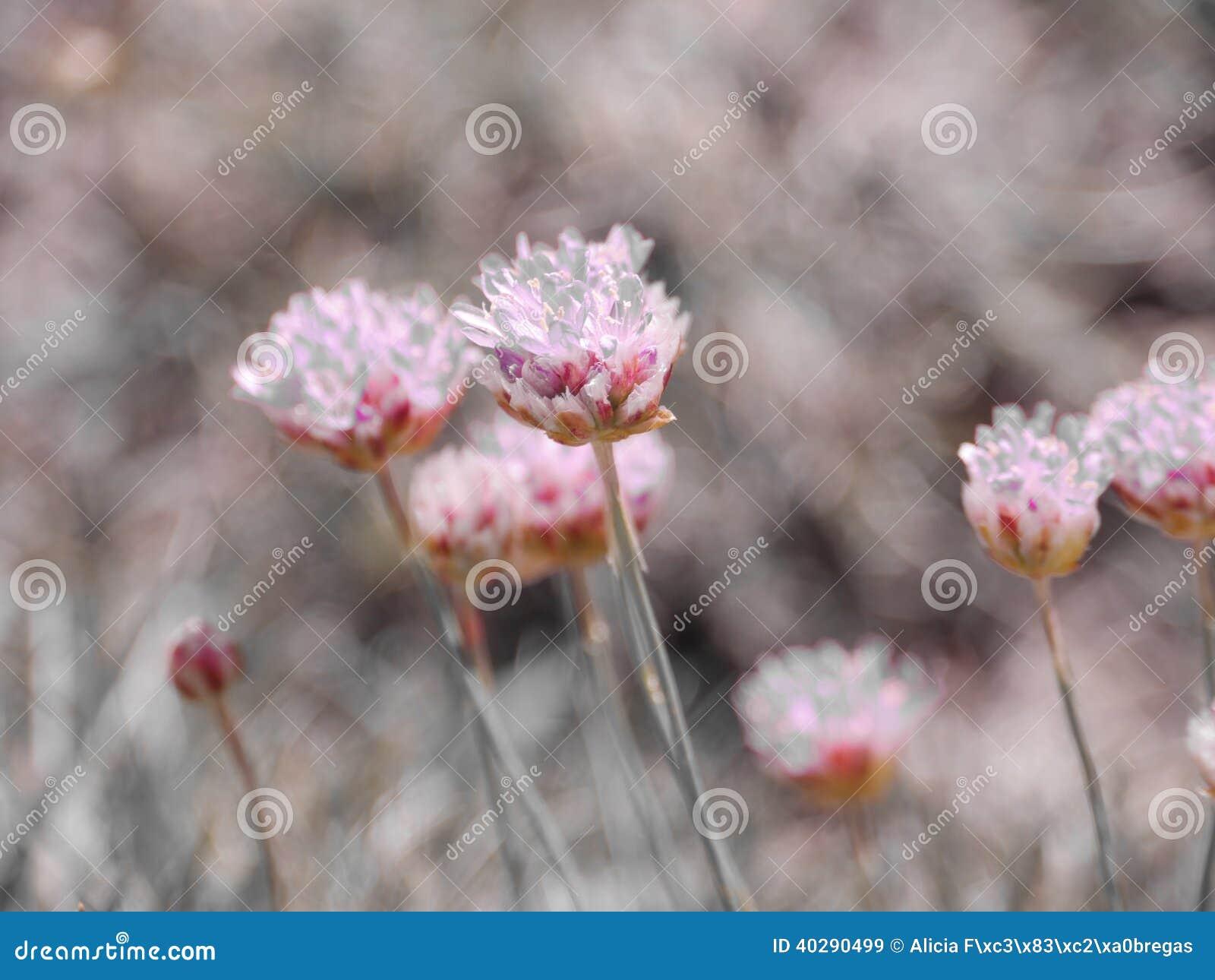 Фиолетовые кристаллические цветки