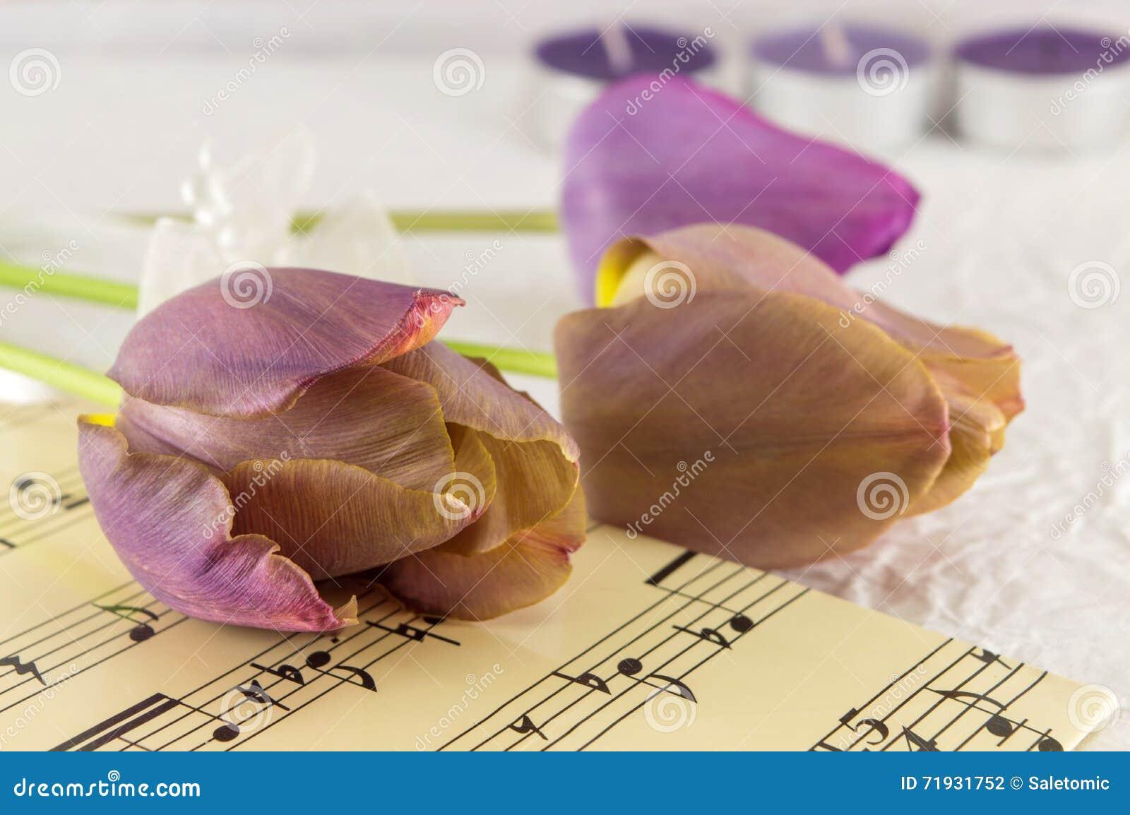 Фиолетовые тюльпаны на листе музыки