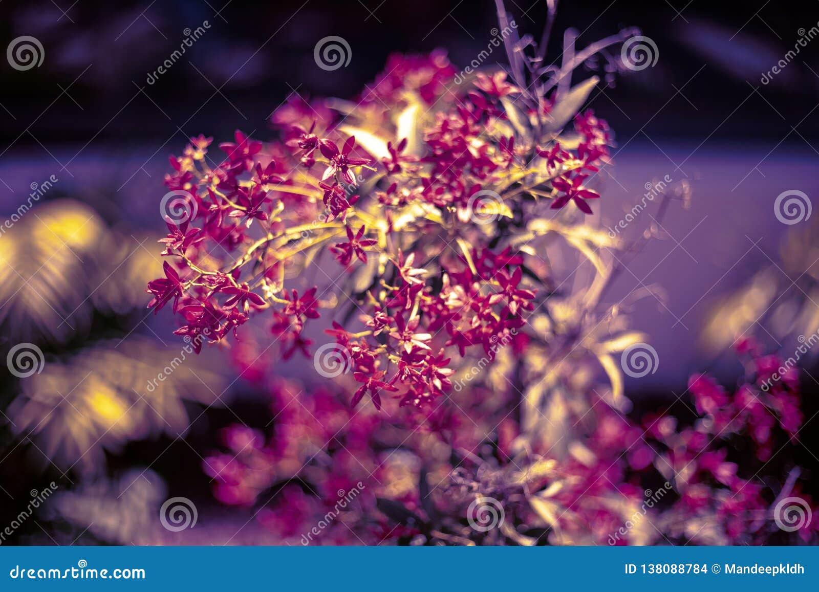 Флористическая предпосылка bokeh Естественные яркие покрашенные обои запачканная предпосылка