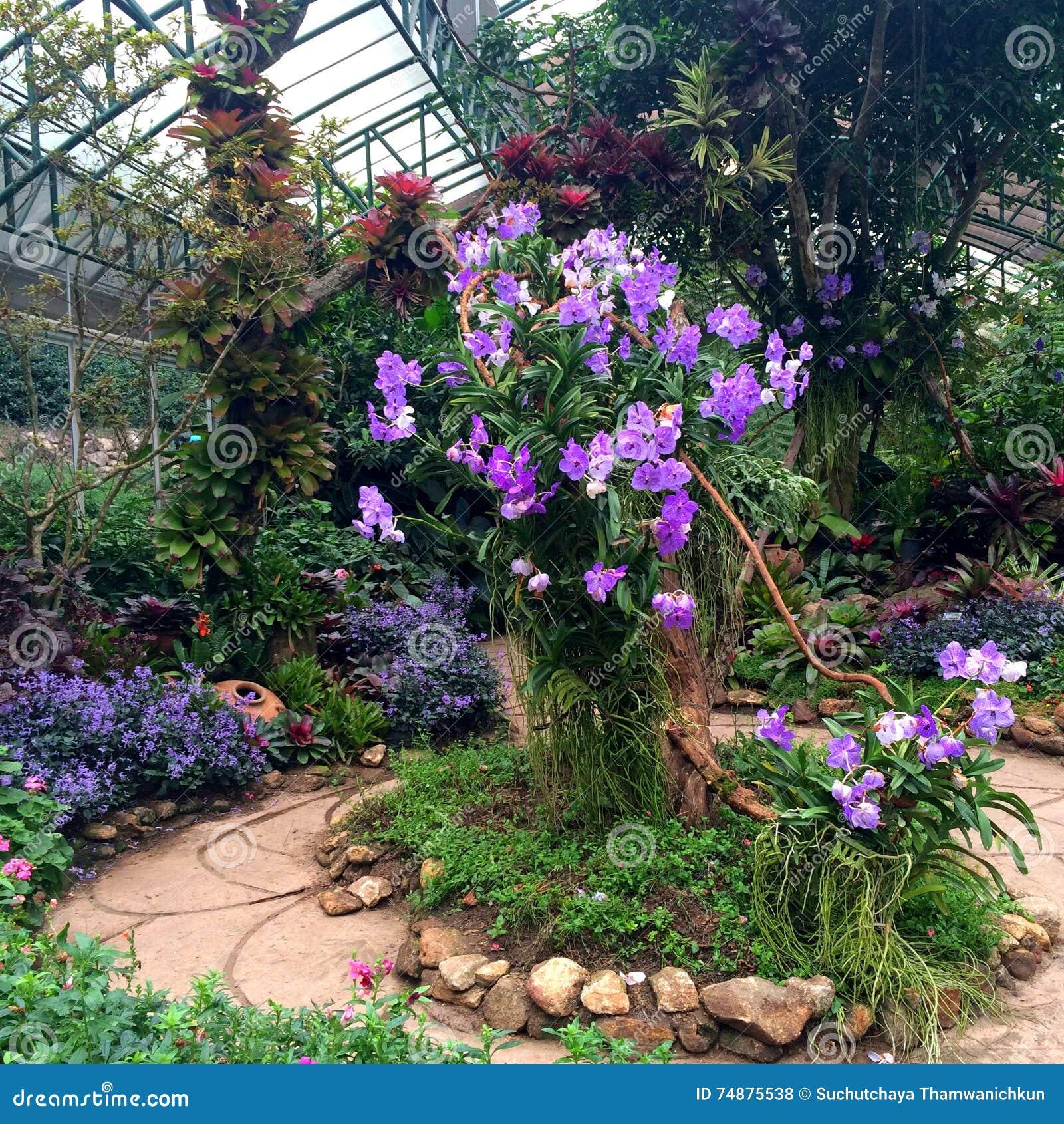 Фокусировать на большом дереве с фиолетовой орхидеей в саде зеленого дома