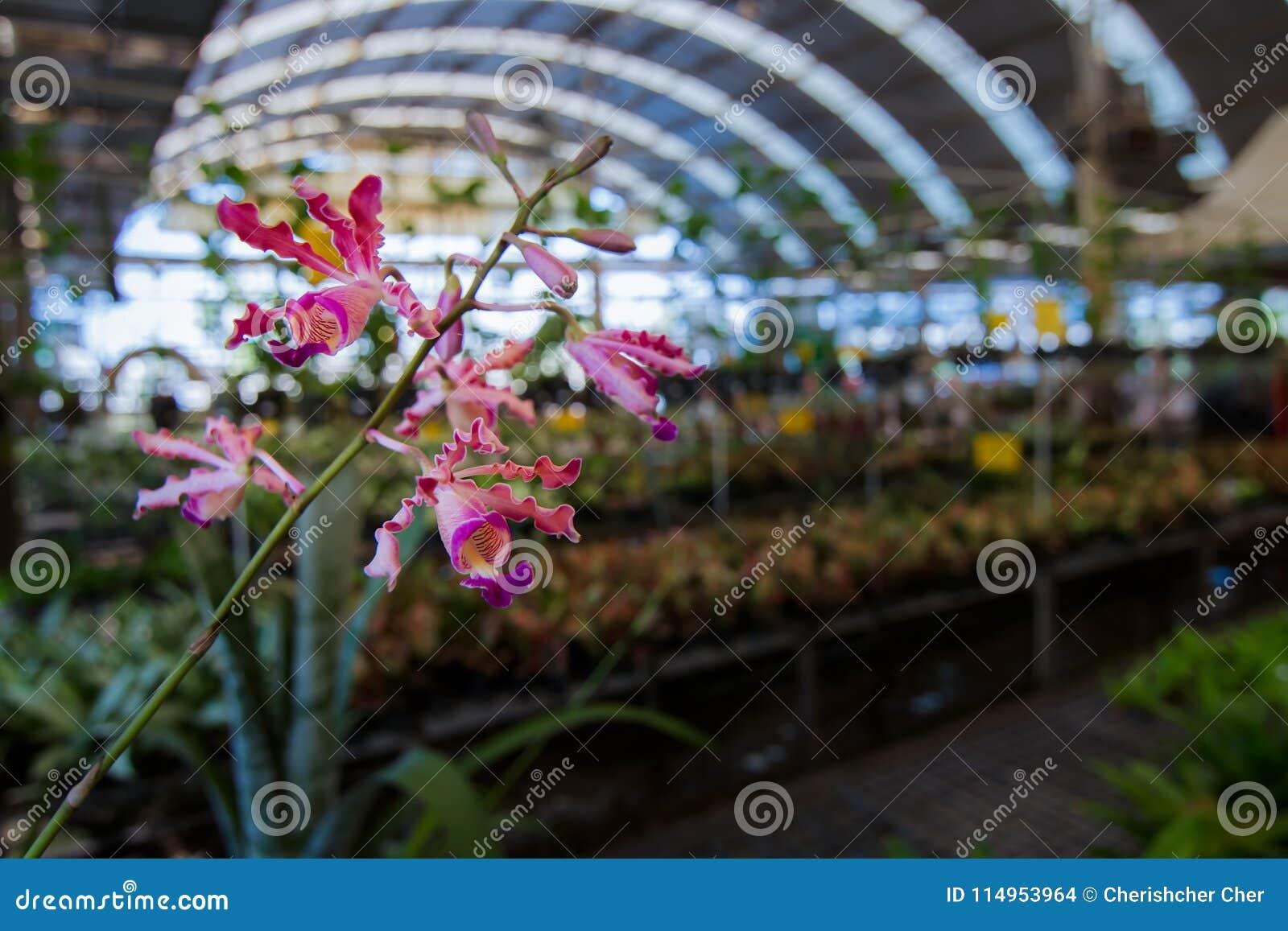 Фоновое изображение цветков орхидеи на ферме там космос для входного сигнала текста цветок нерезкости предпосылки внутрь как взгл