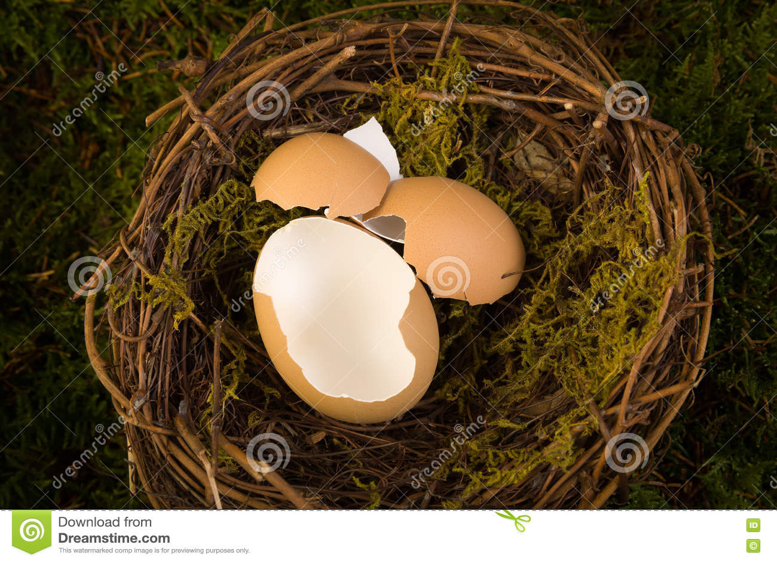 Фон гнезда младенца цифровой