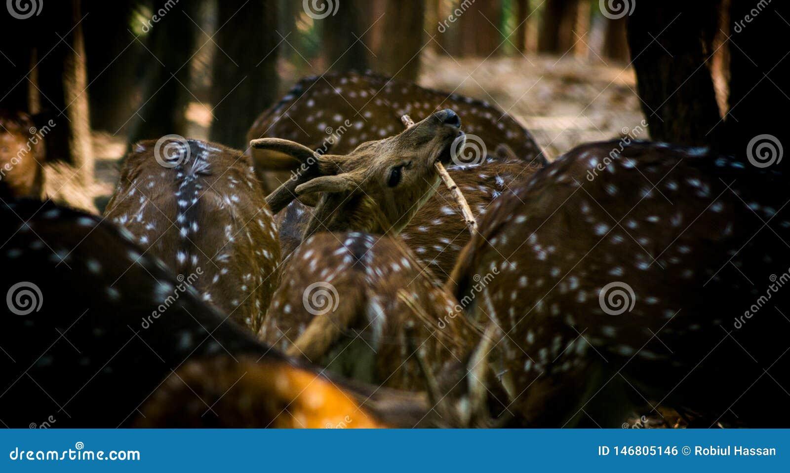 Фотография живой природы, фотография оленей, фотография живой природы