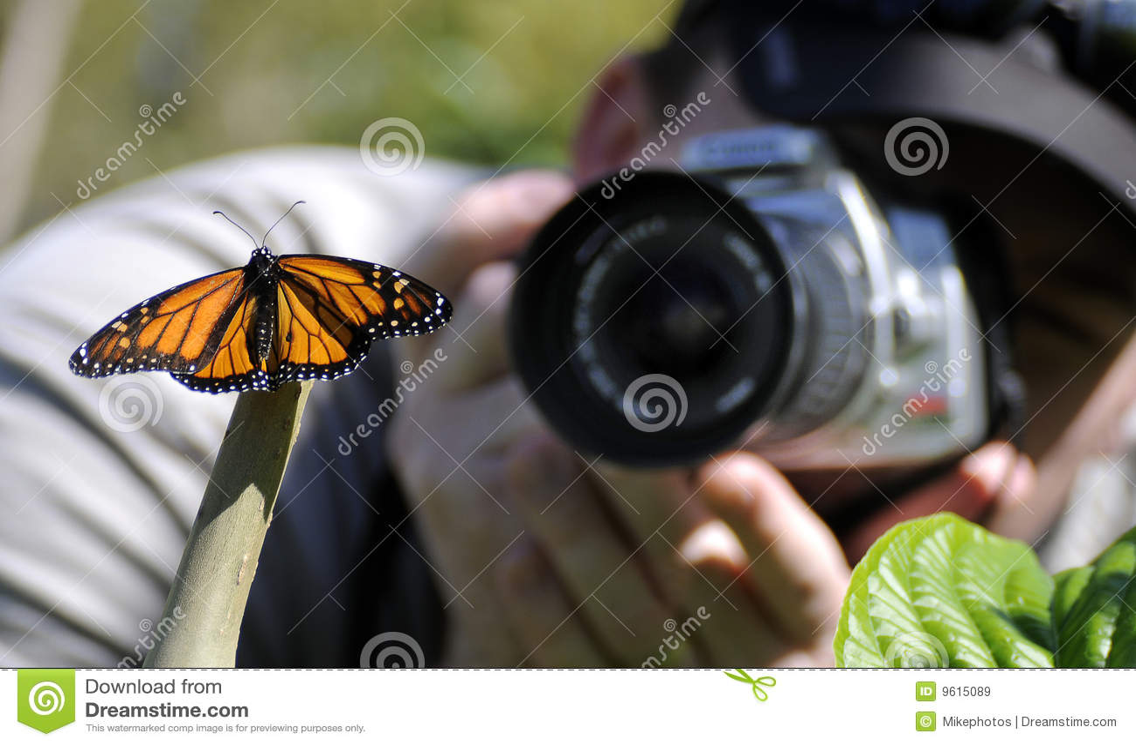 фотограф бабочки