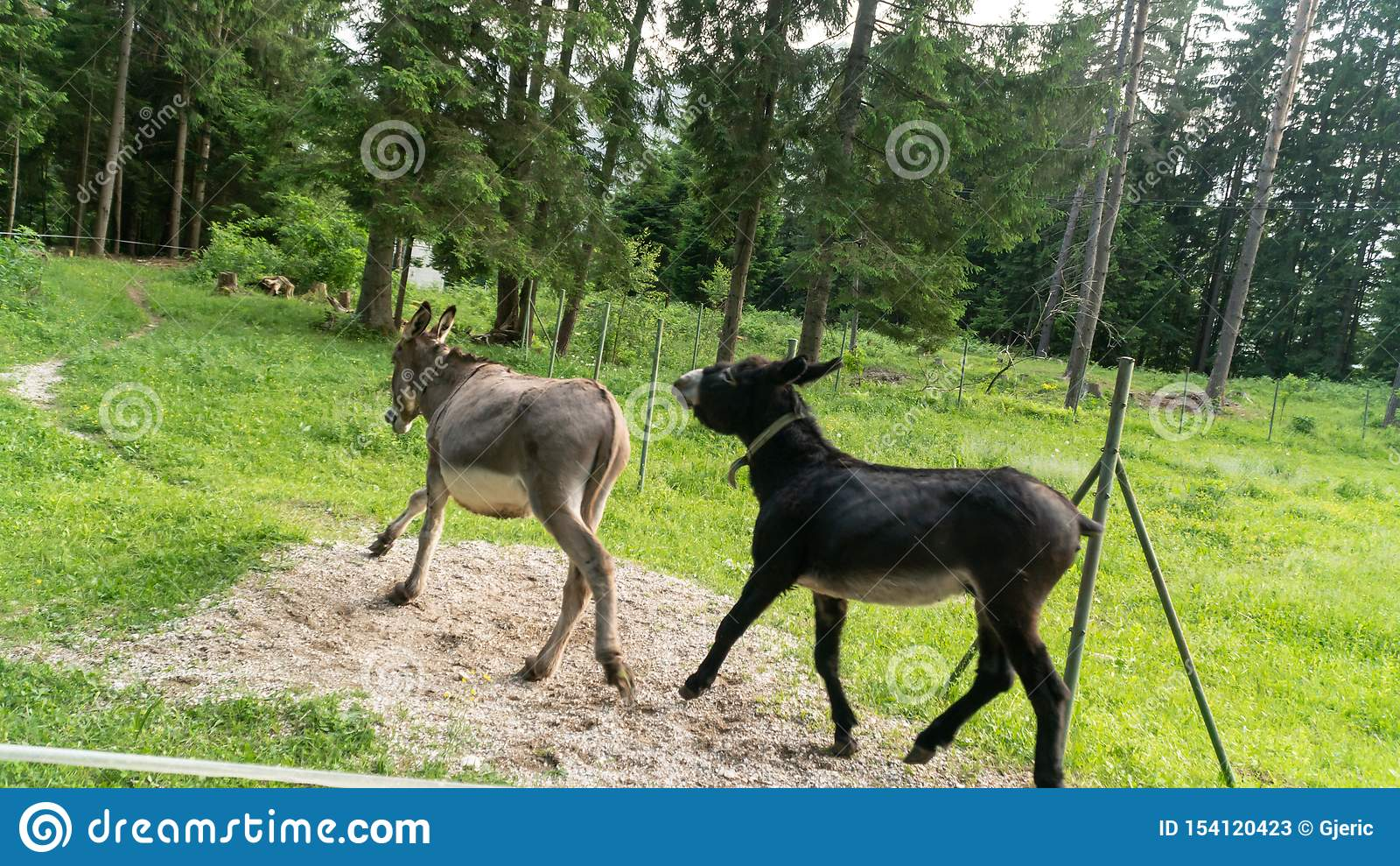 Фото 2 ослов играя друг с другом на ферме
