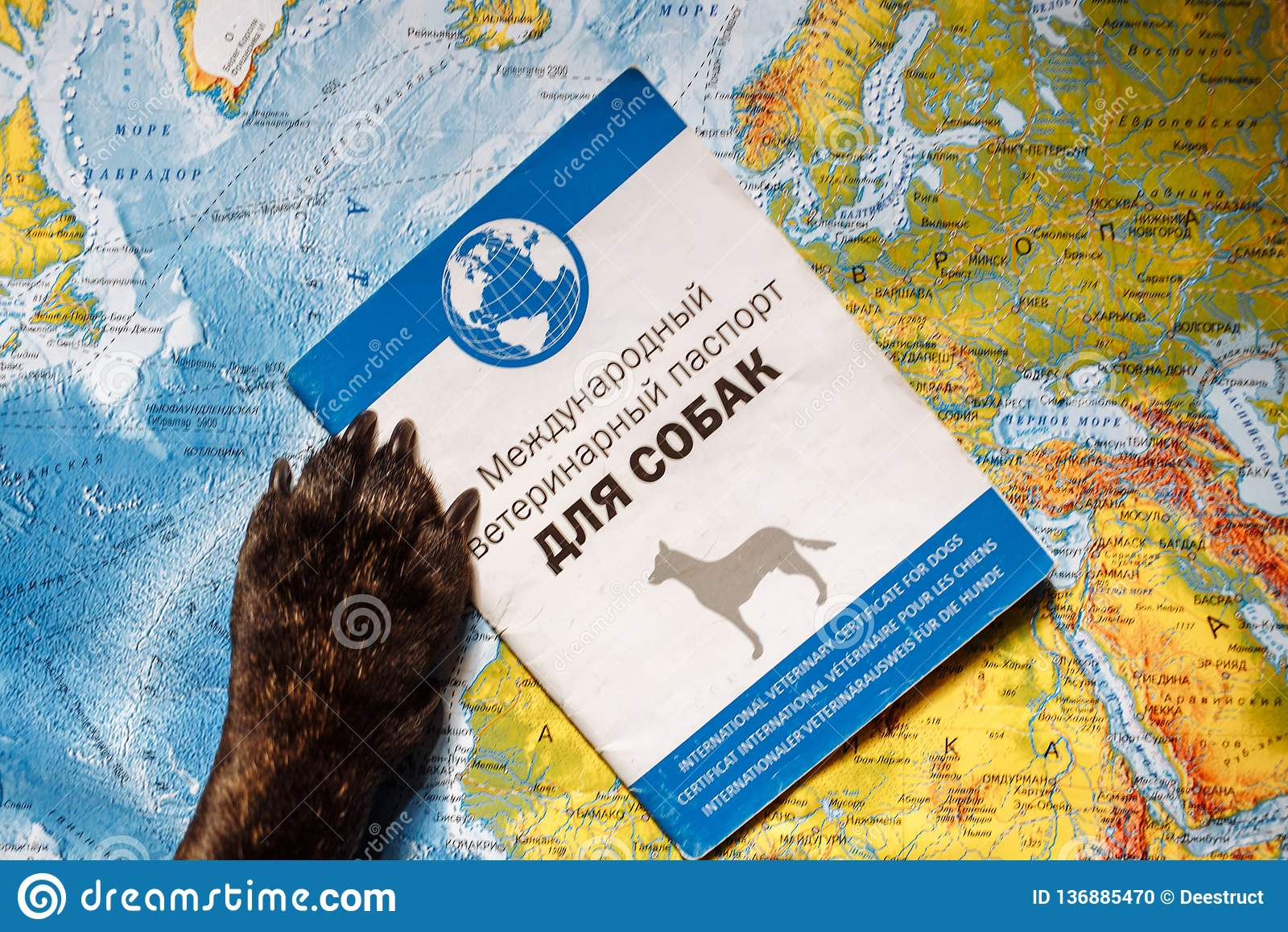 Французский бульдог лежит на карте мира с паспортом, шляпой и небольшим самолетом, близкими вверх по лапкам, перемещению с собако
