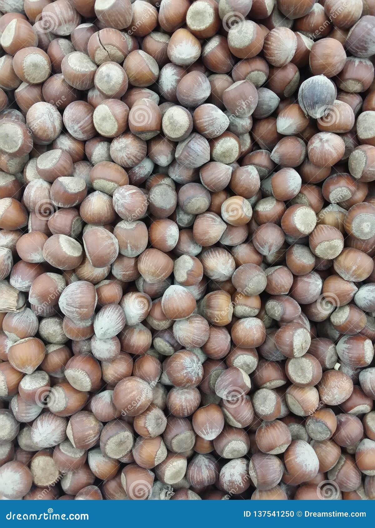 Фундуки сушат изображение гаек плода