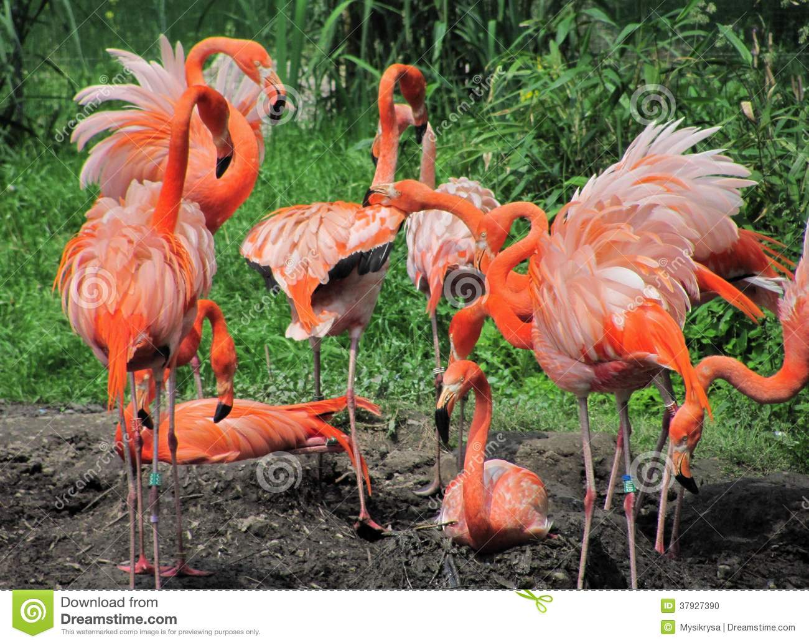 Фламинго вложенности