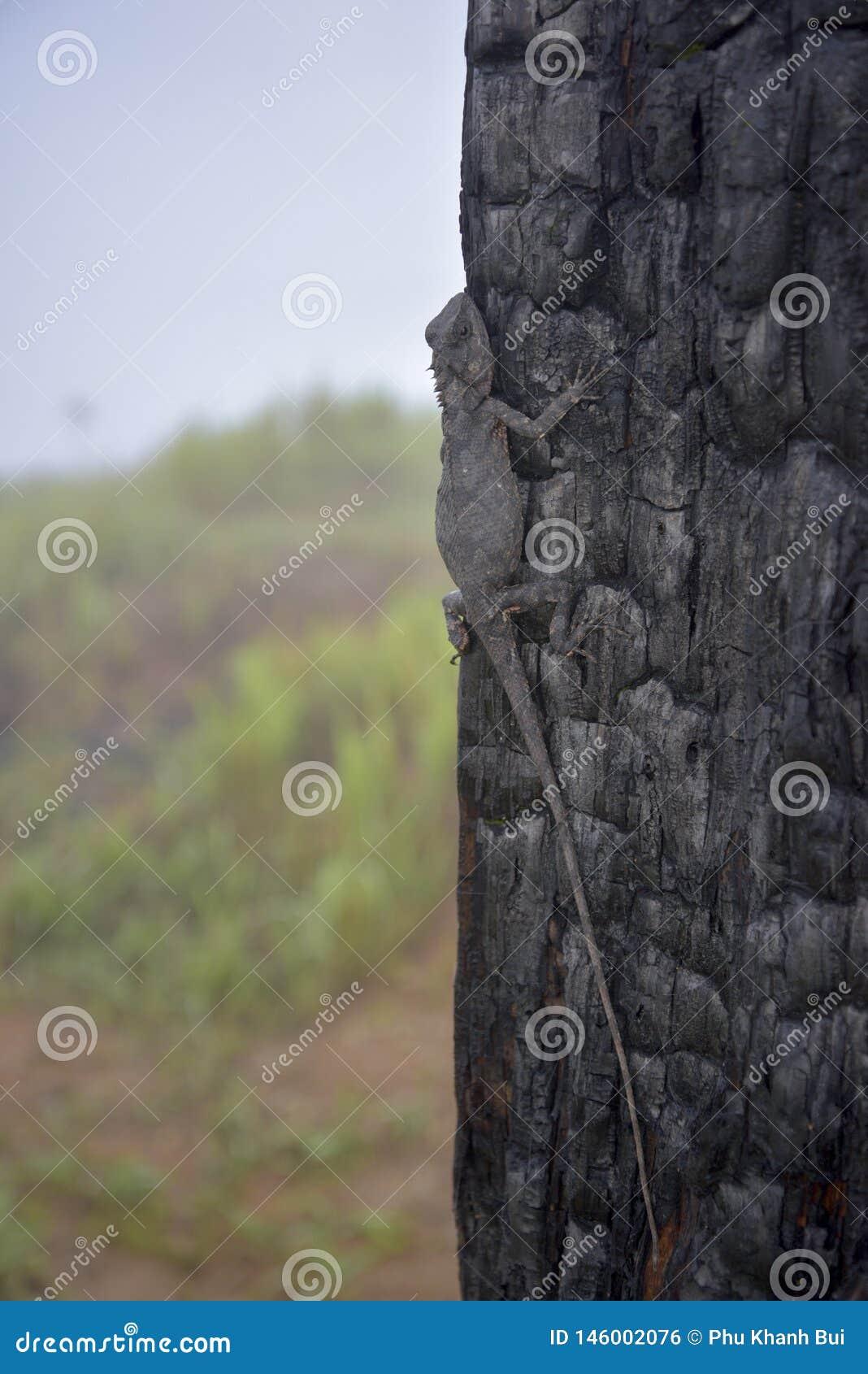 Хамелеоны изменяют цвет на, который сгорели части 12 ствола дерева