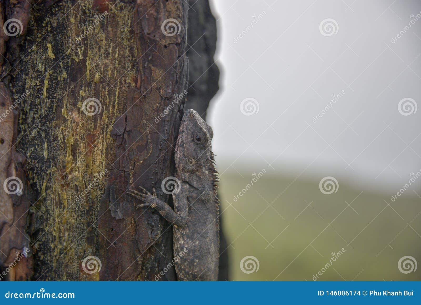 Хамелеоны изменяют цвет на, который сгорели части 3 ствола дерева