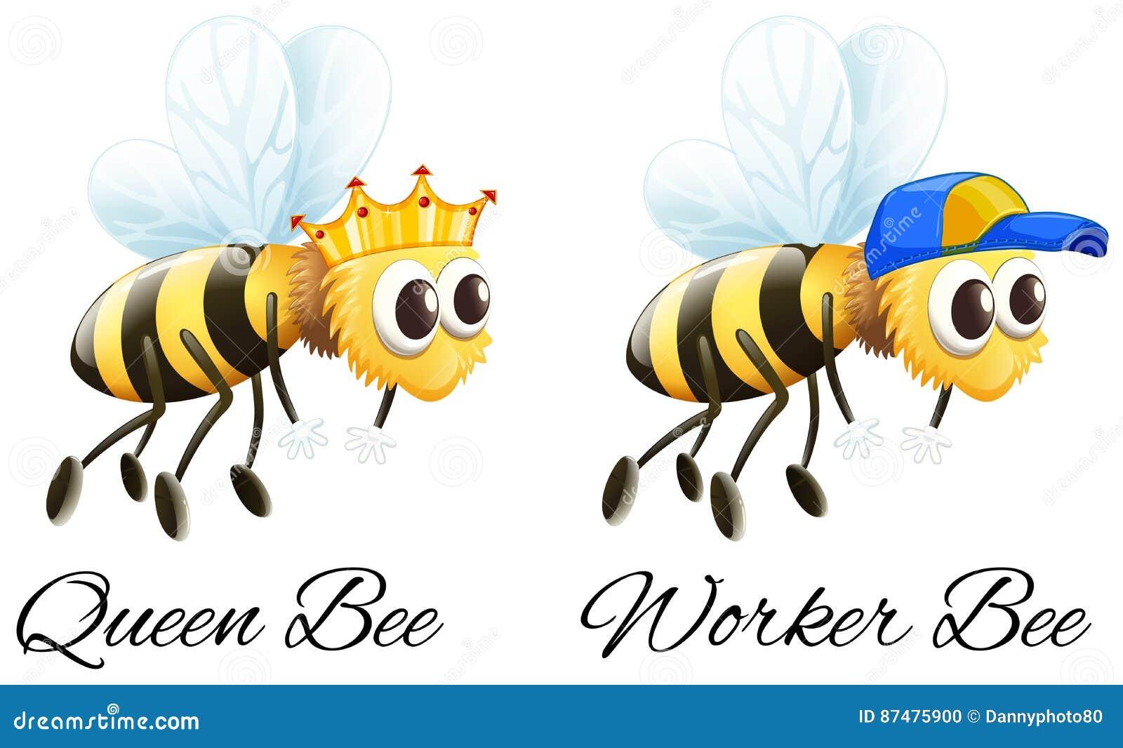 Характеры пчелы королевы пчел и работника