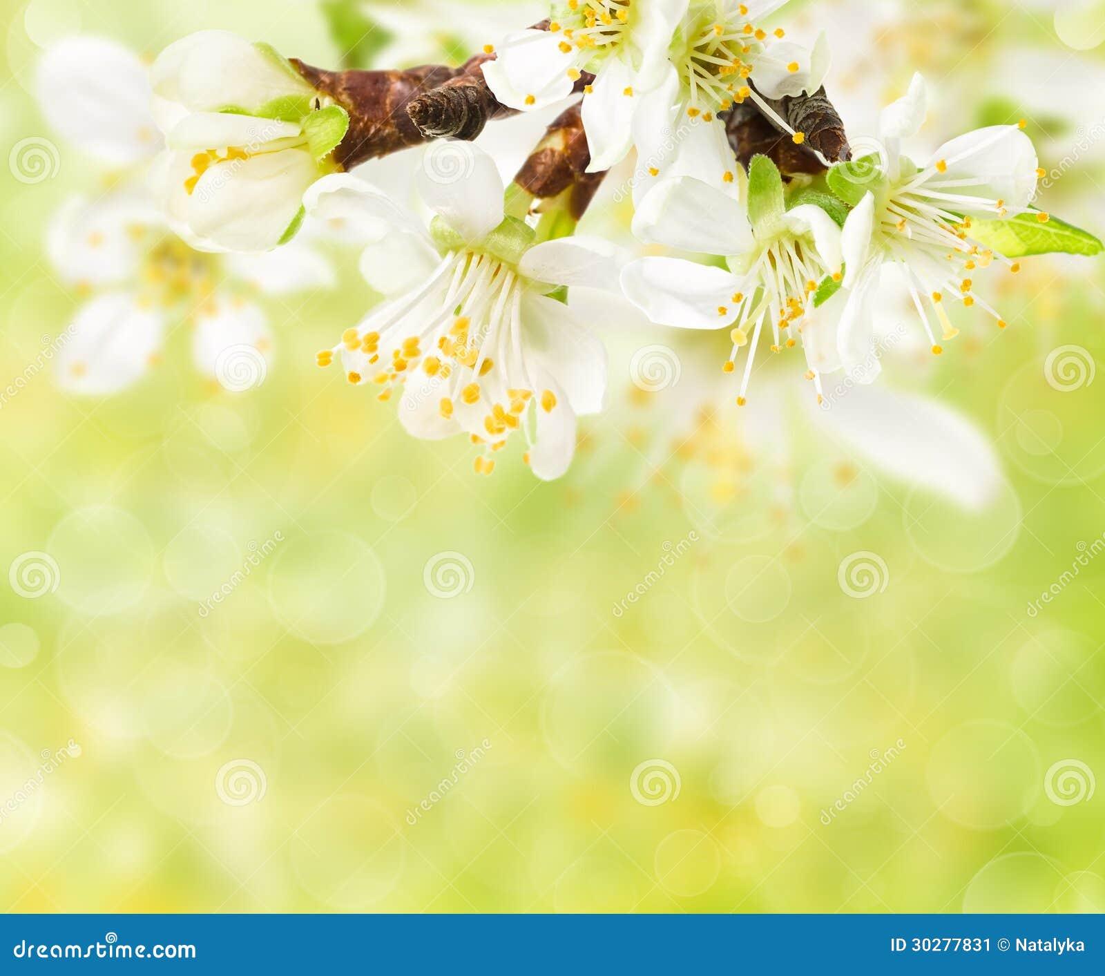 Хворостина цветений весны