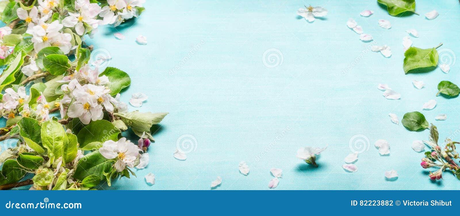 Хворостины цветения весны на голубой предпосылке бирюзы, взгляд сверху, знамени Весеннее время