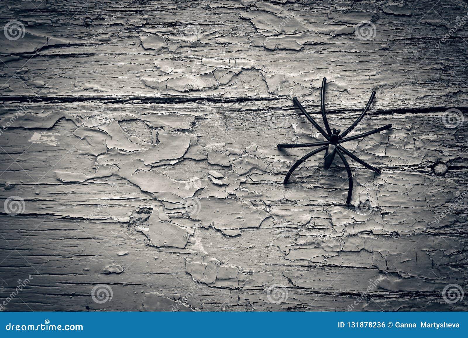 Хеллоуин, черный паук, тайна, космос экземпляра, взгляд сверху