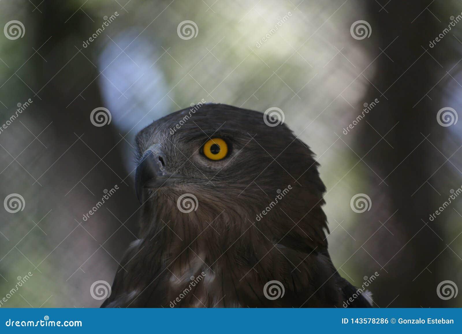 Хищнический крупный план птицы