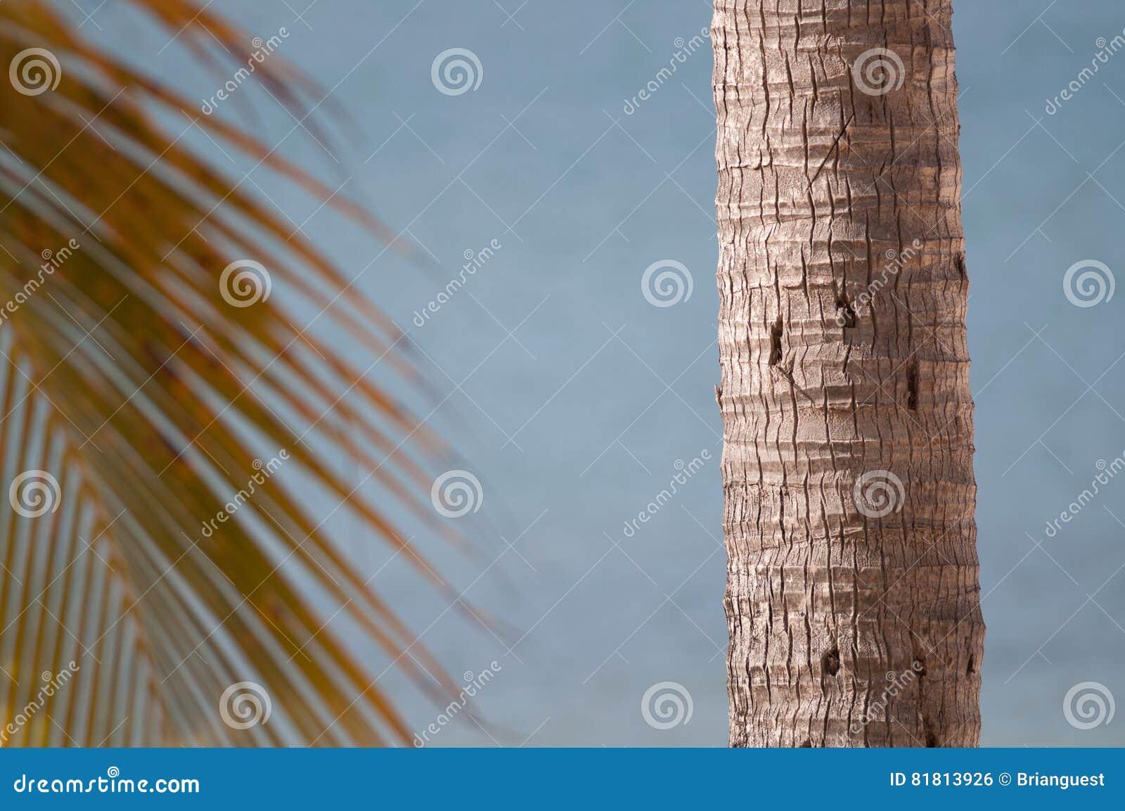 Хобот и ветвь пальмы