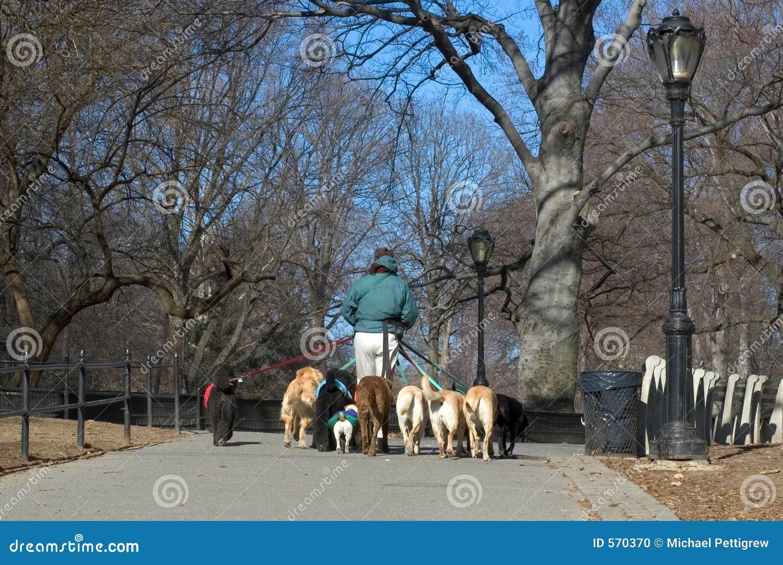 ходок профессионала собаки