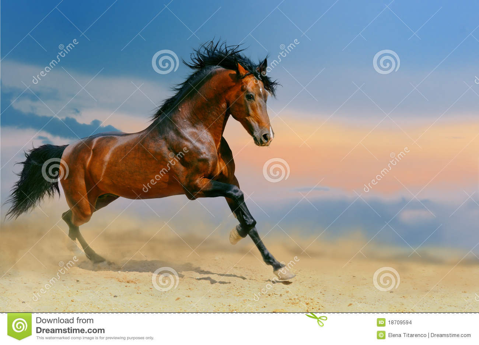 ход лошади пустыни