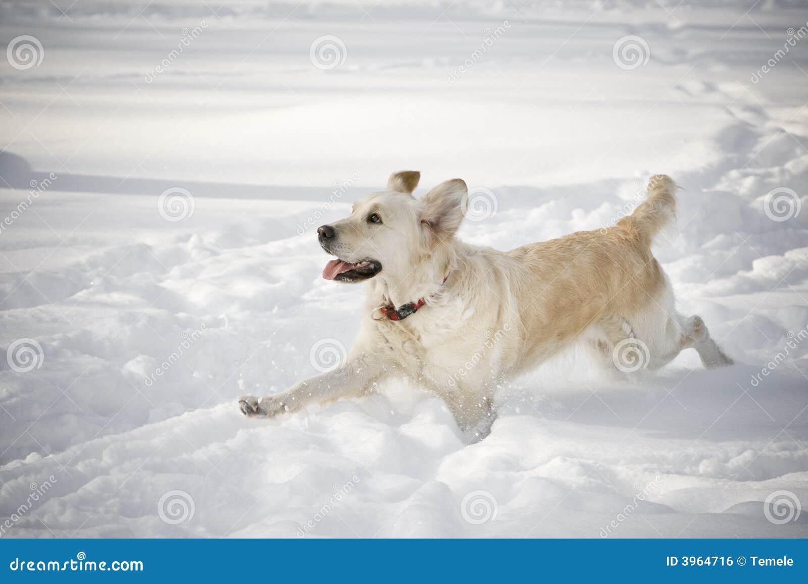 ход собаки счастливый