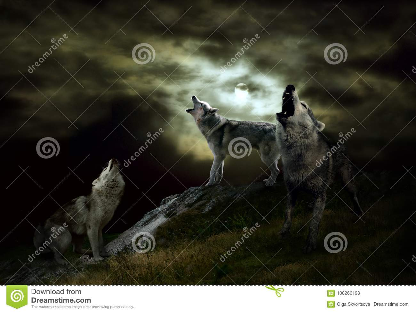 Хозяев ночи волки