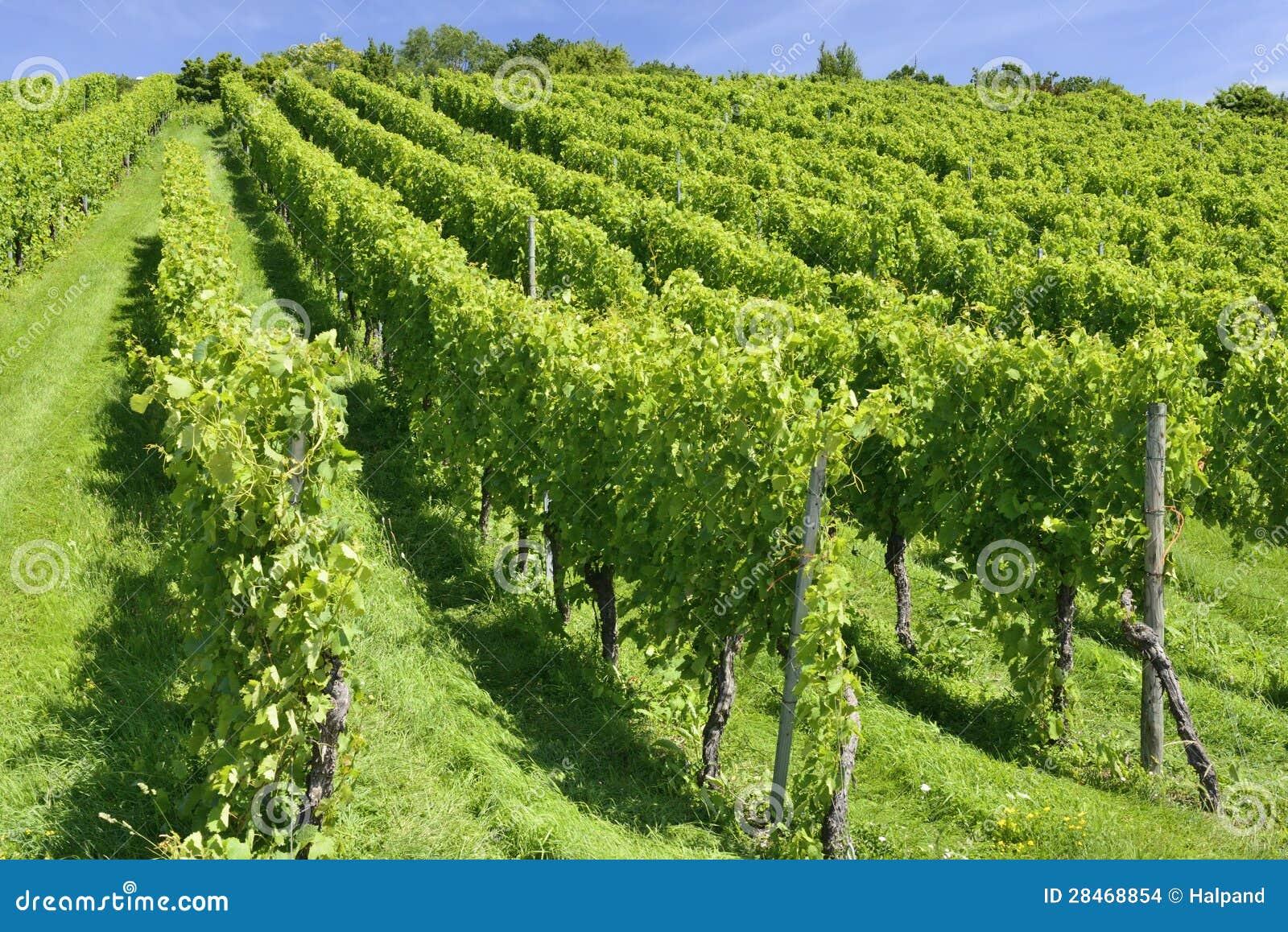 Холмистый виноградник, Штуттгарт