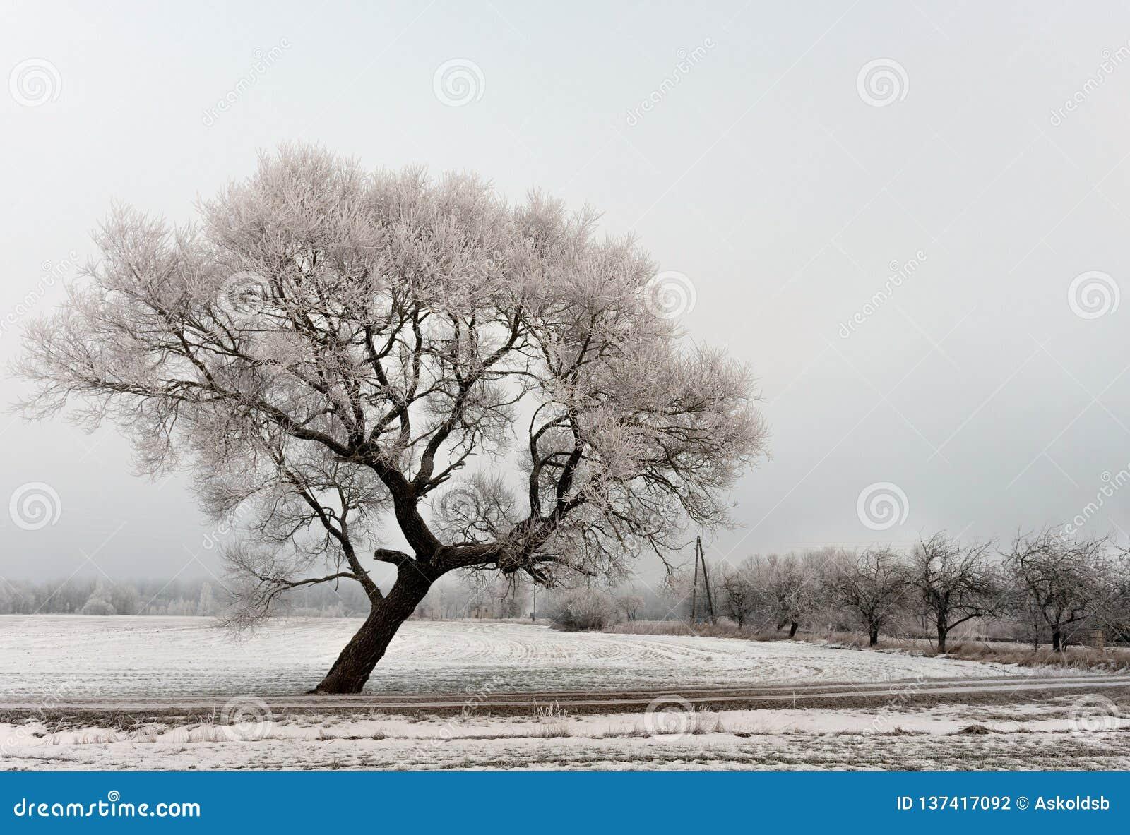 Холодный ландшафт утра зимы с дорогой и сиротливым деревом