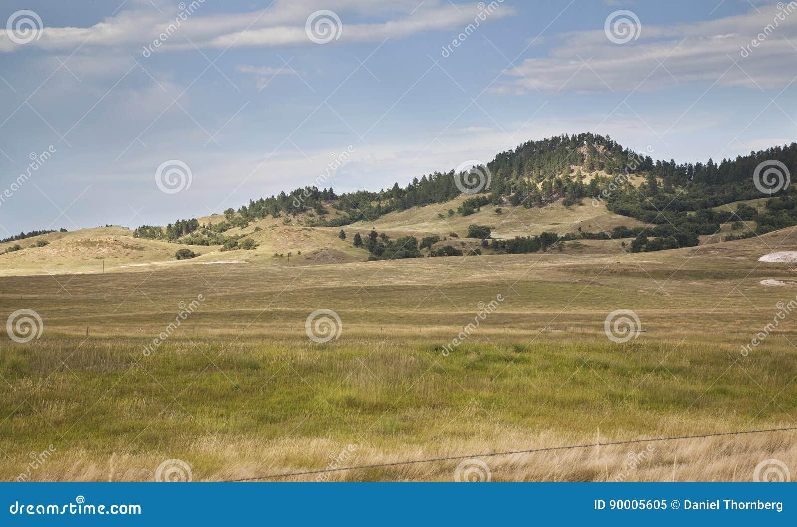 Холмы и сосны в Black Hills Южной Дакоты
